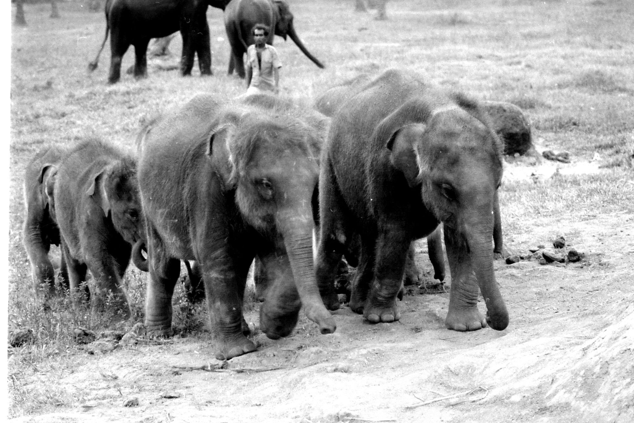 10/2/90: 32: Kegalla elephant orphanage