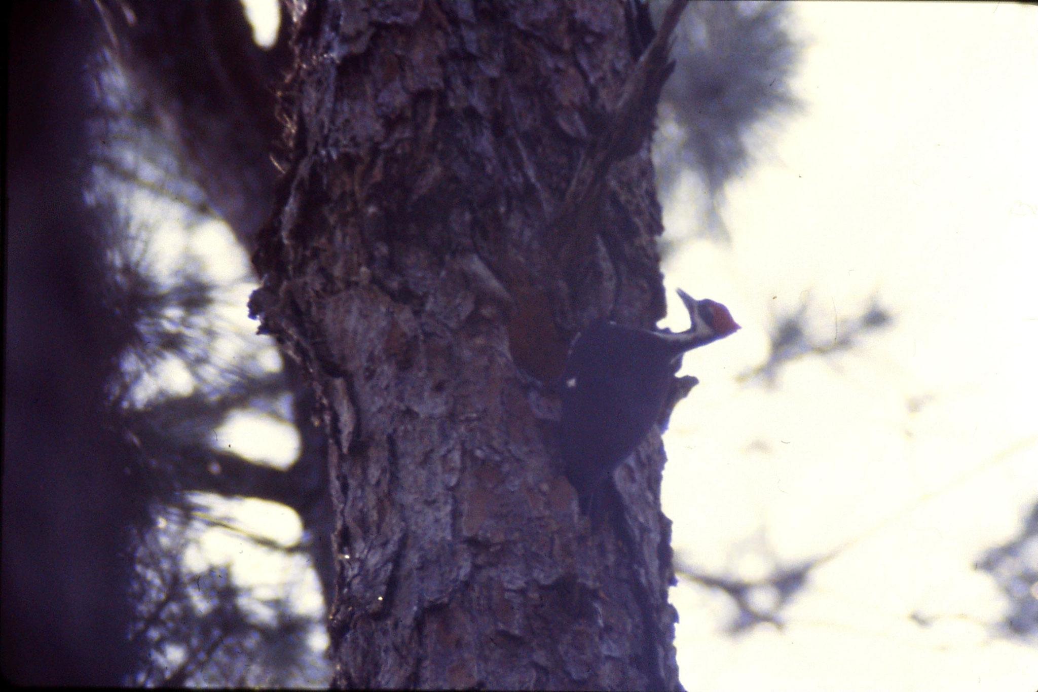 13/3/1991: 15: Okefenokee Swamp