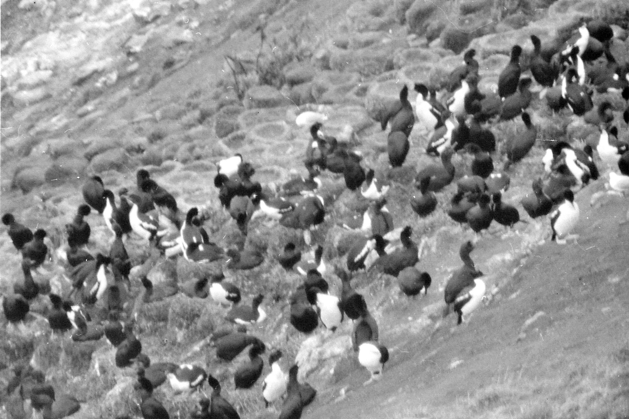 19/8/1990: 24: Dunedin