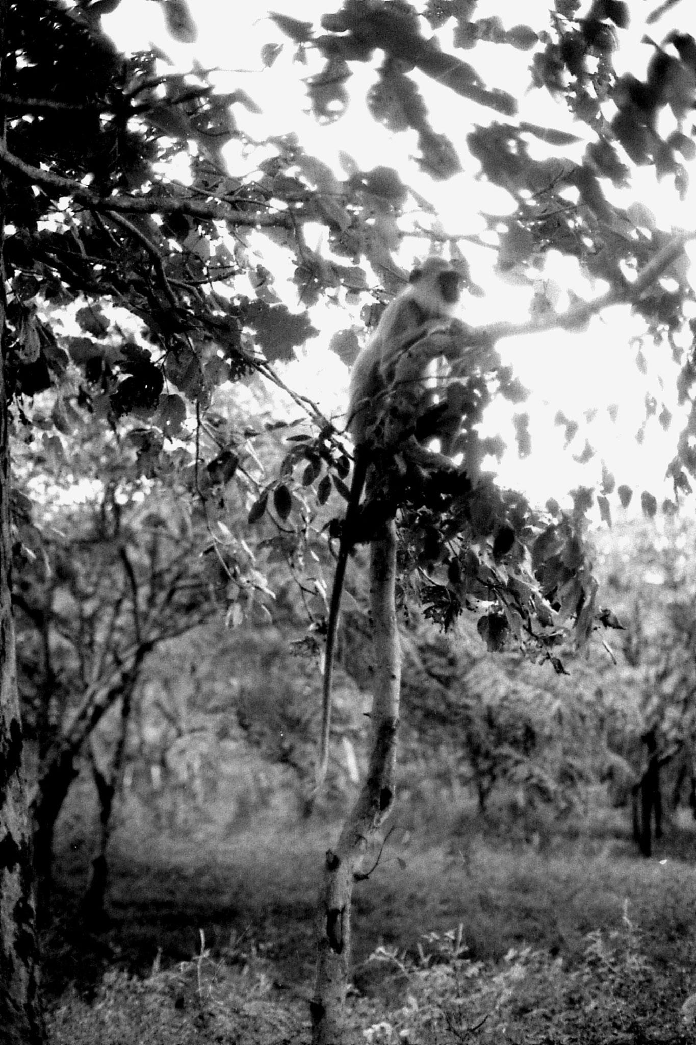7/2/90: 16: Polonnaruwa
