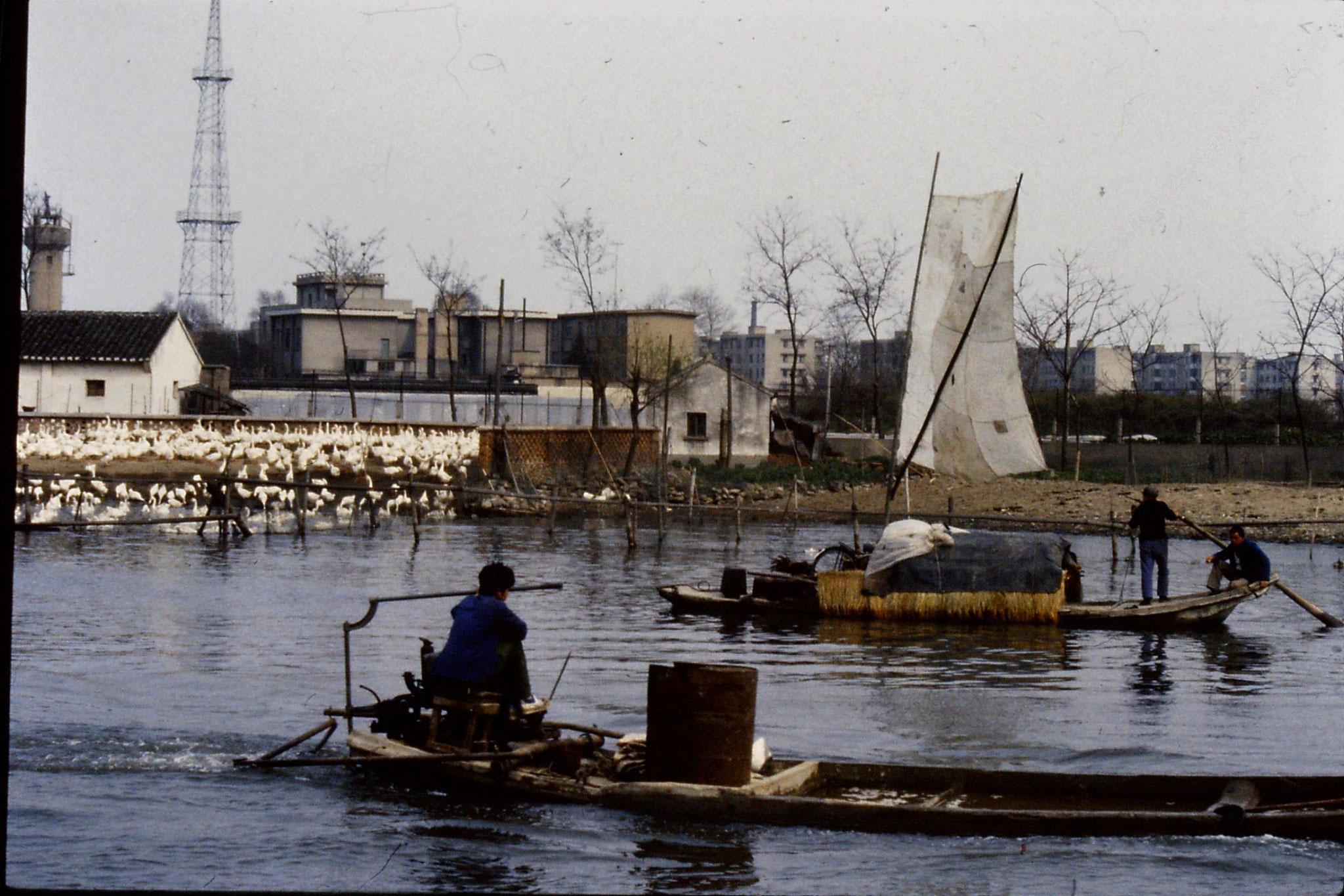 22/3/1989: 6: Suzhou: geese farm