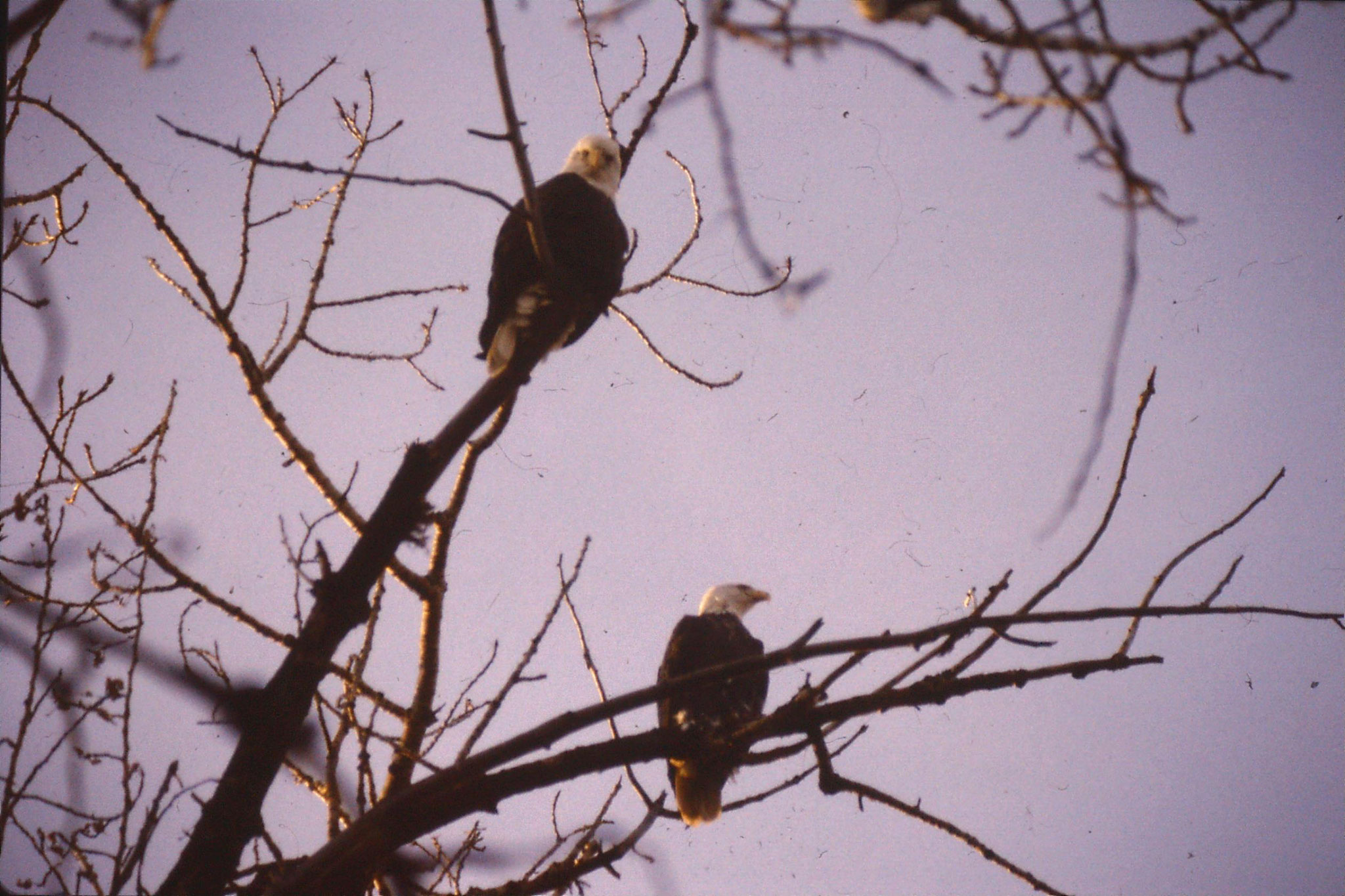 25/1/1991: 1: Boise