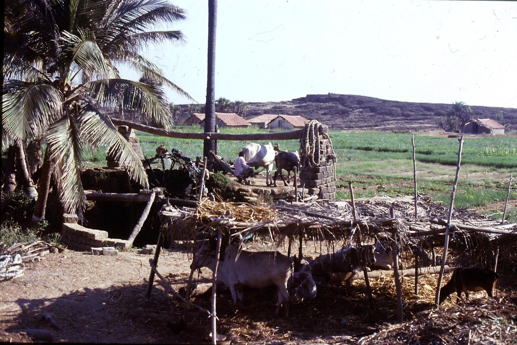 15/12/1989: 4: Diu, Nagoa Beach water wheel well
