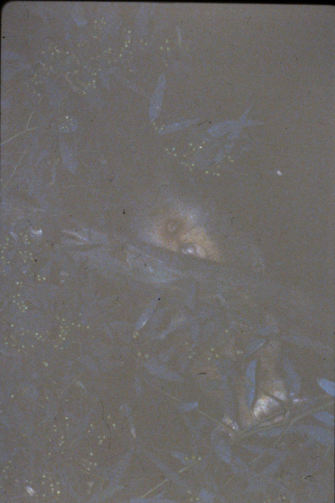 2/11/1990: 19: Nyngan, possum