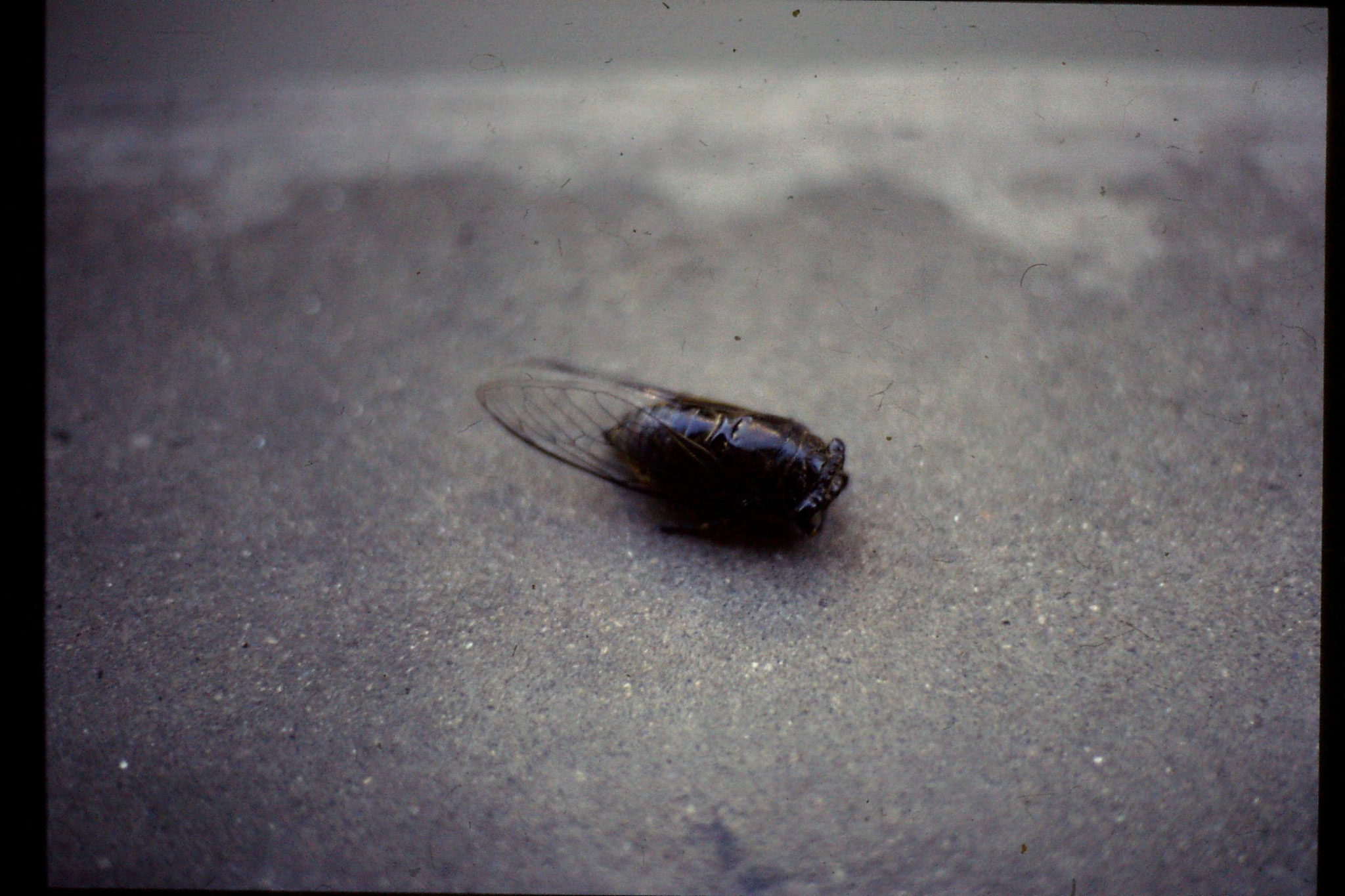 17/7/1989: 29: dead cicadas on balcony