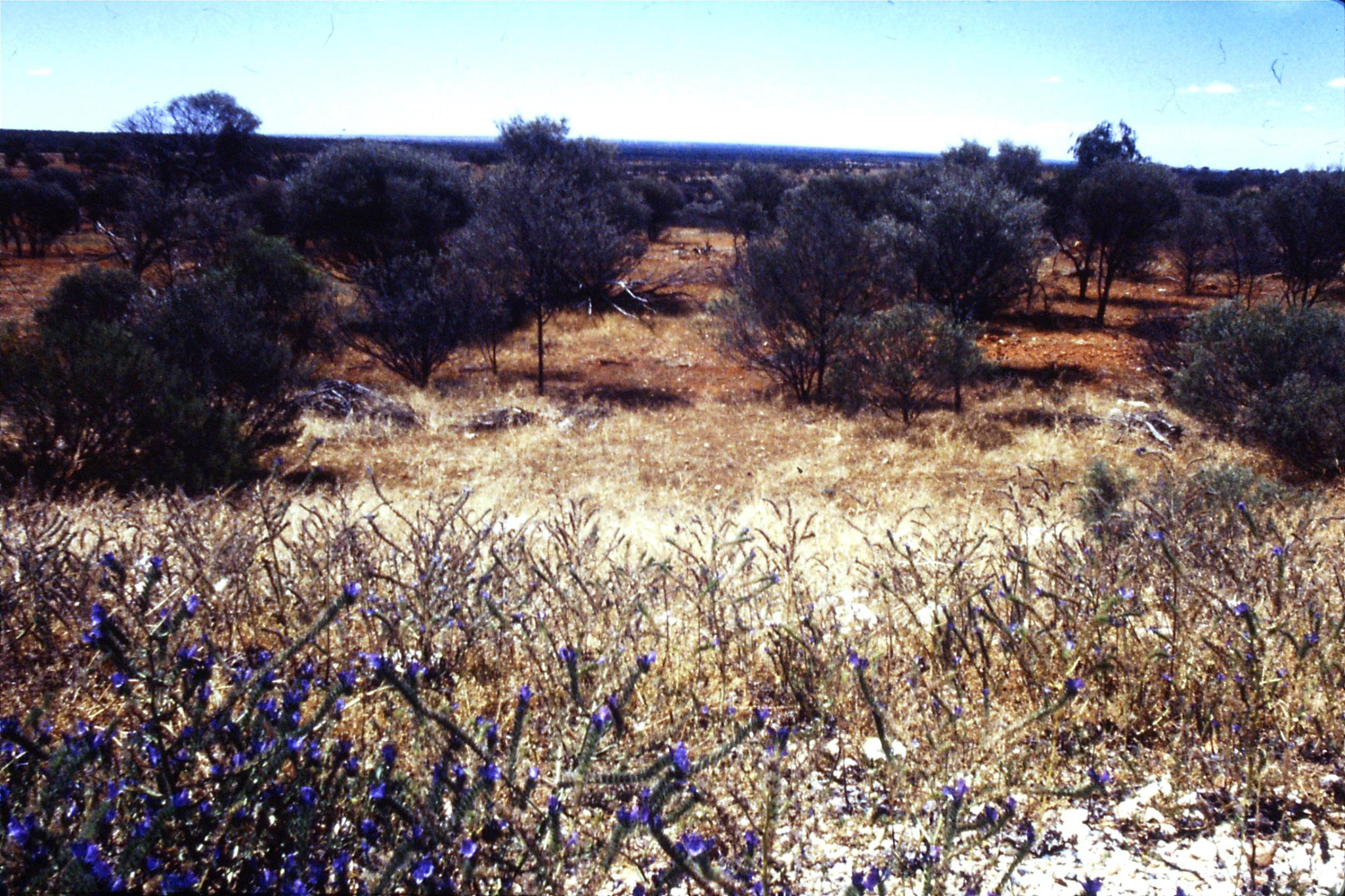 3/11/1990: 20: view north before Willcannia