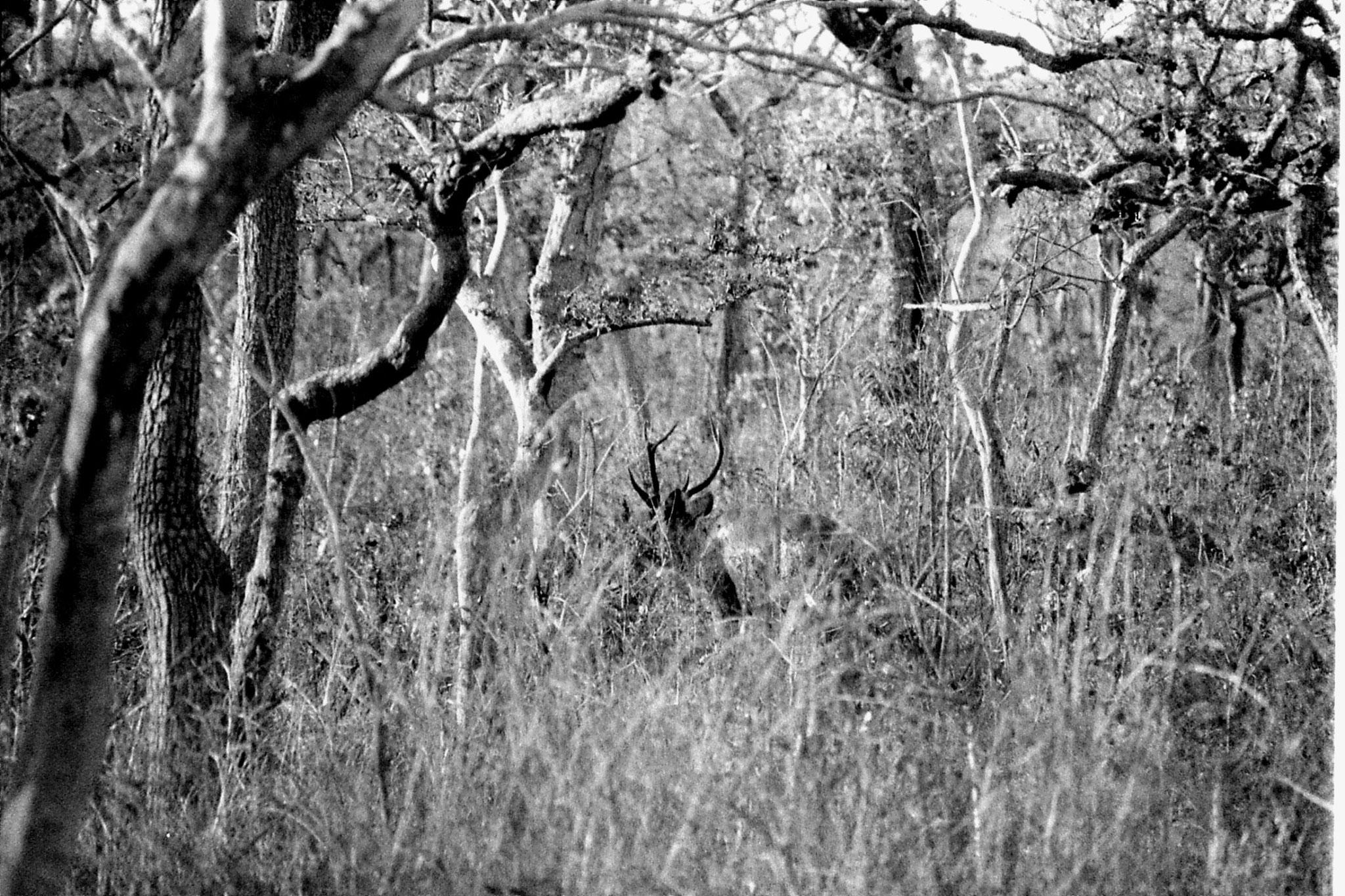 27/2/90:10: Bandipur sambur