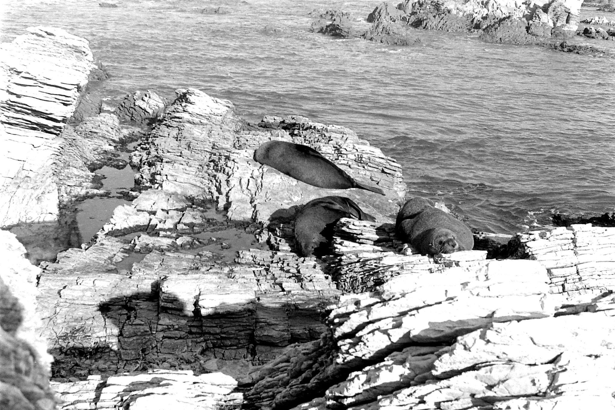 9/8/1990: 23:Kaikoura: seals