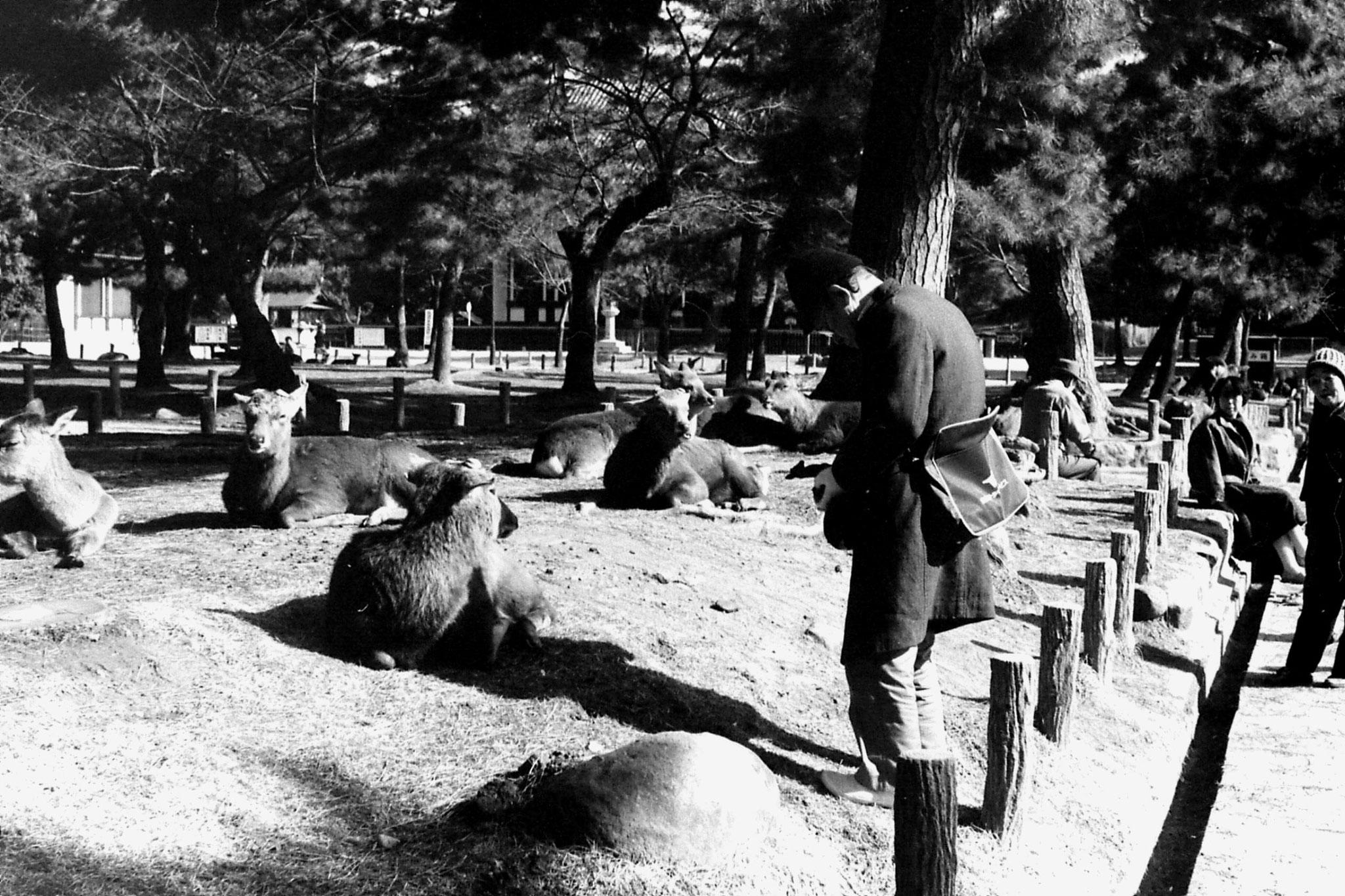 25/1/1989: 27:Nara