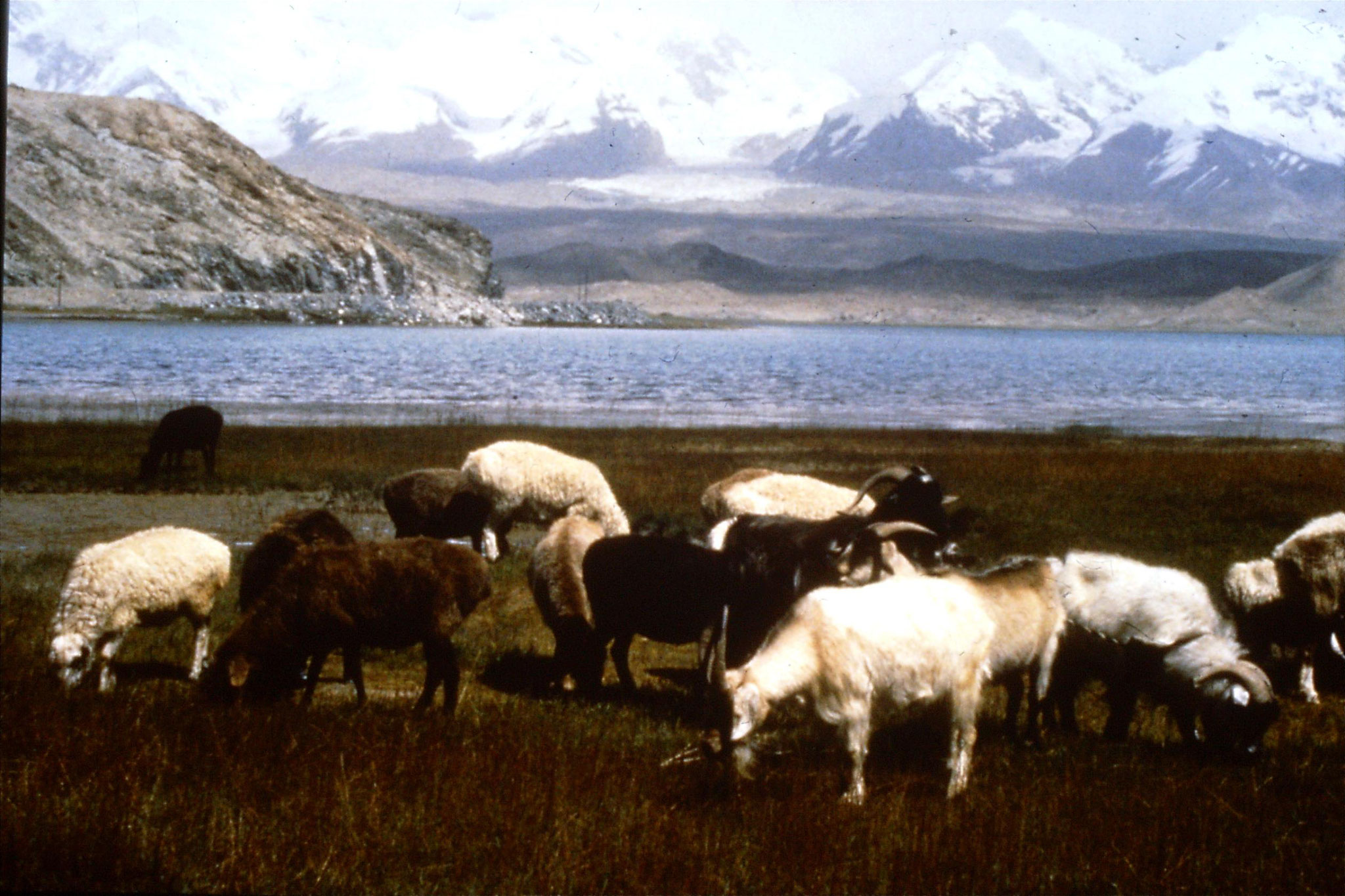 11/9/1989:26: Karakoram Highway, at Karakuli Lake, Mt Muztagta