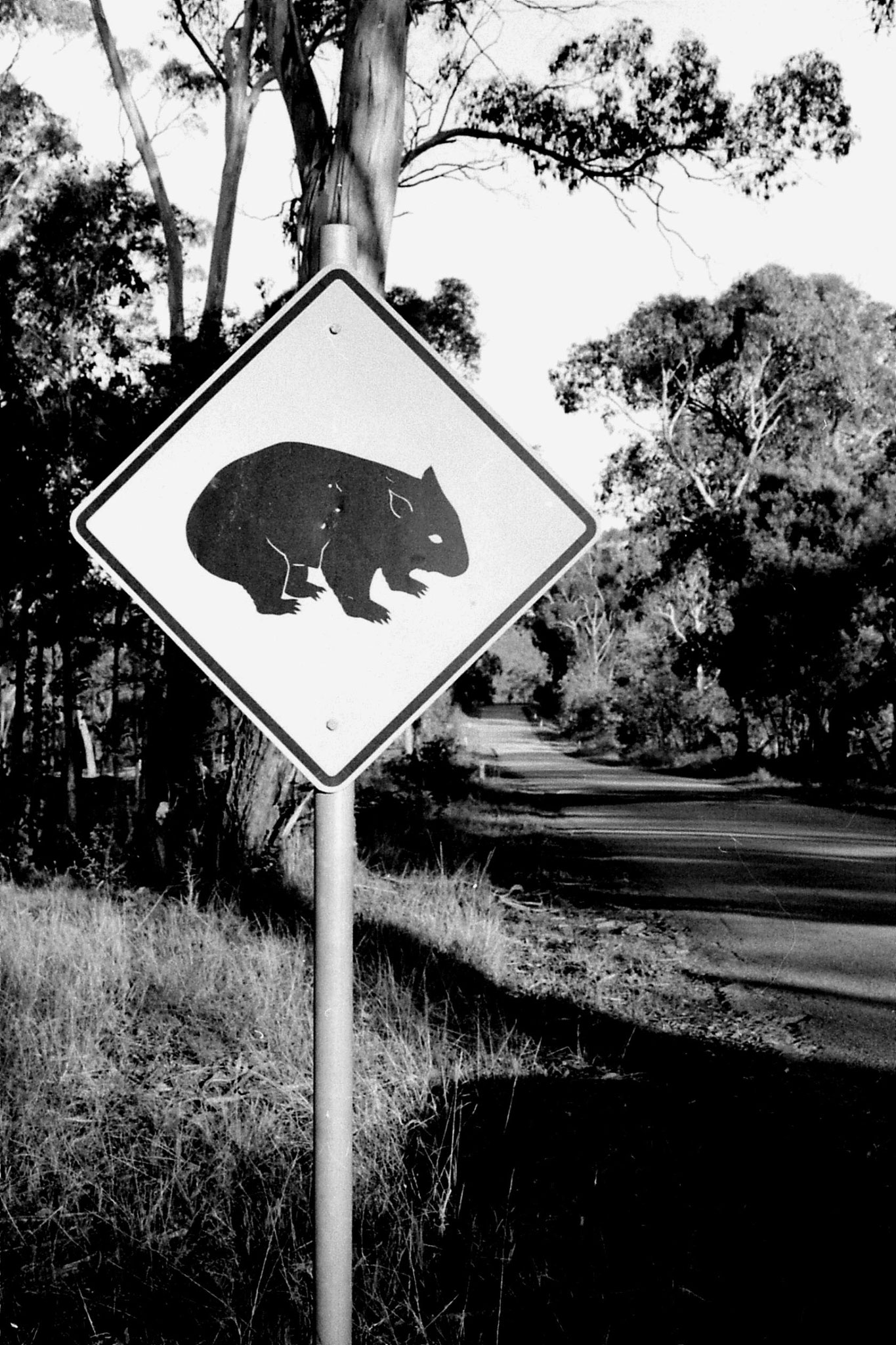 27/9/1990: 15: nr Mt Buffalo wombat warning