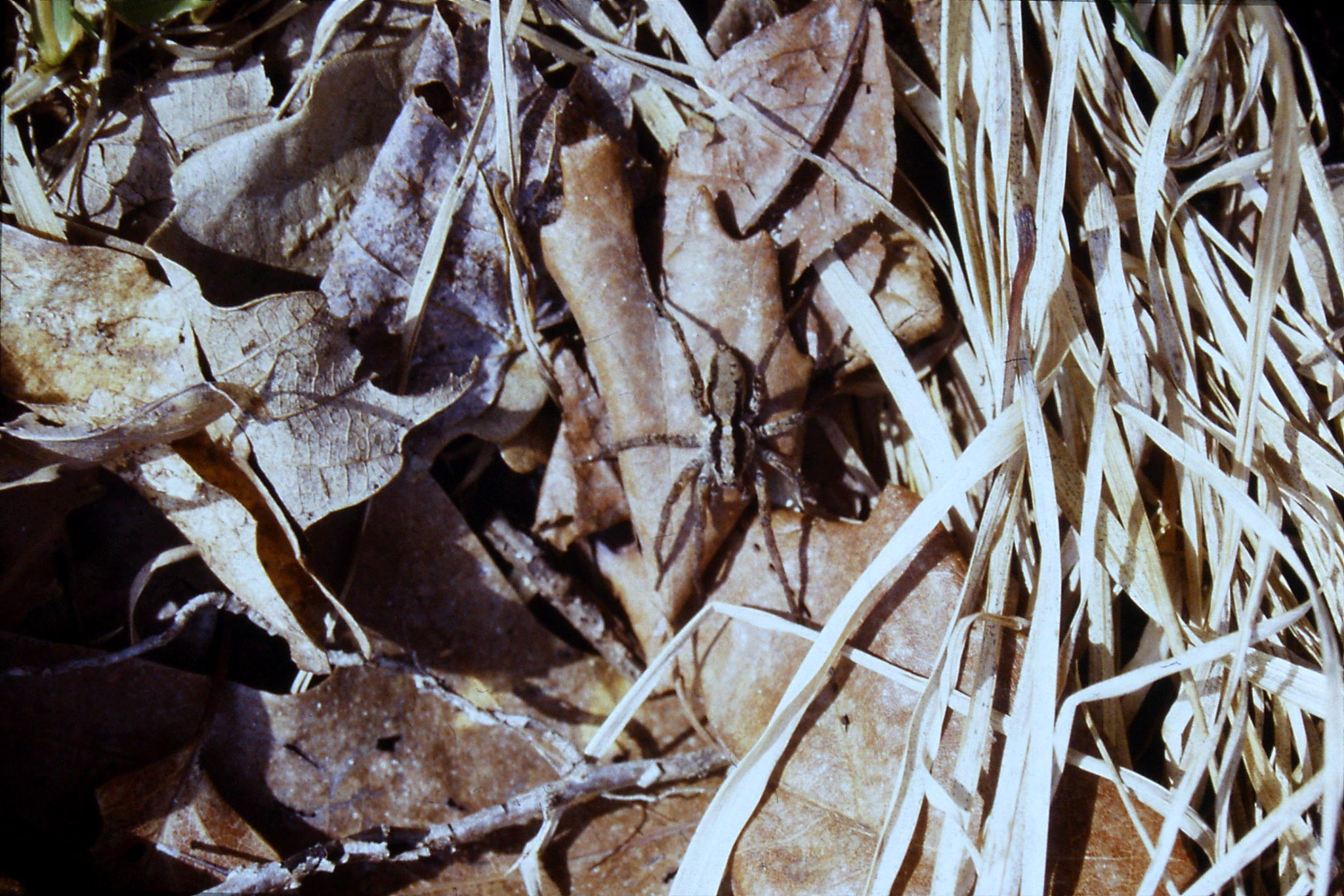 20/3/1991: 1: Seneca Rocks, spider
