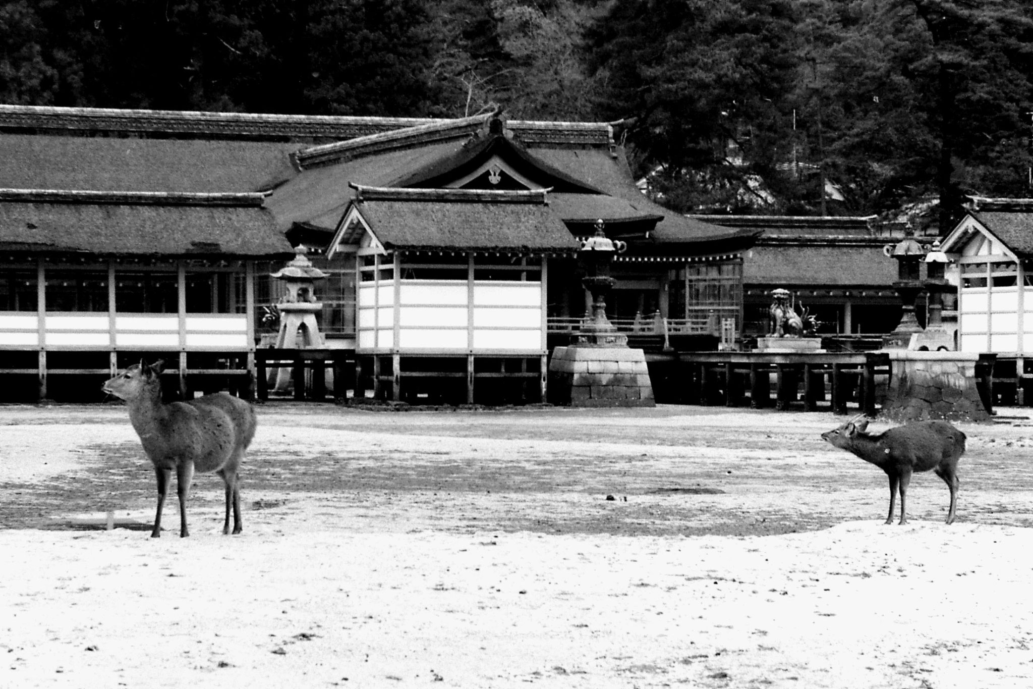 23/1/1989: 36: Itsukushima shrine