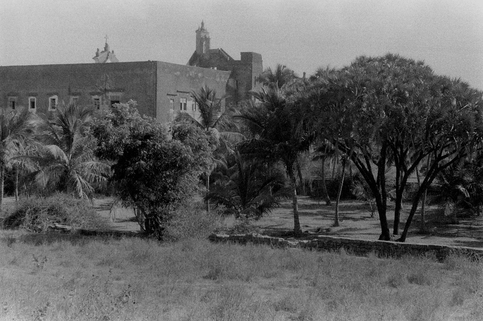 16/12/89: 10: Diu:  palm trees and St Peter's church