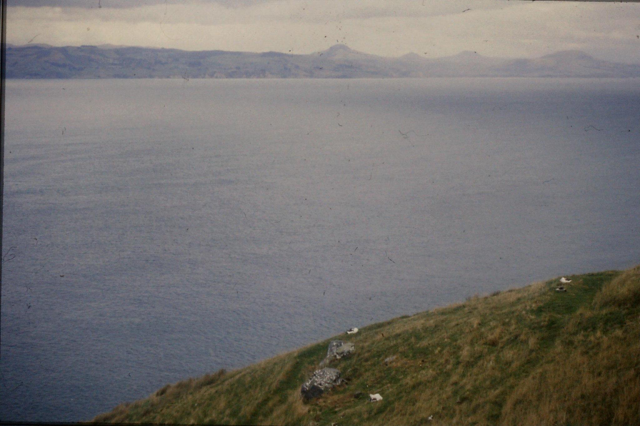 18/8/1990: 13: Dunedin, albatross colony