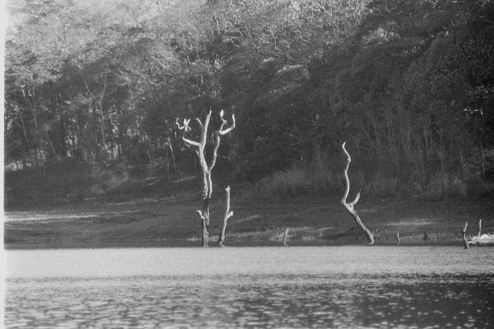 097/29: 23/2/1990 Periyar egrets