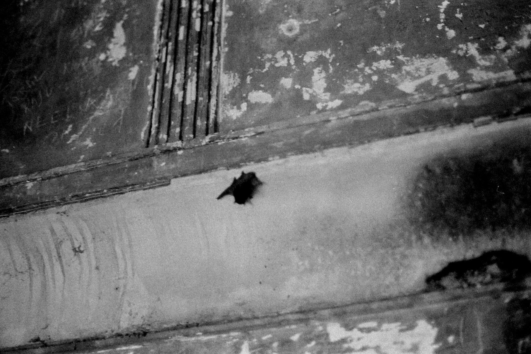 20/11/1989: 16: New Delhi Red Fort bat