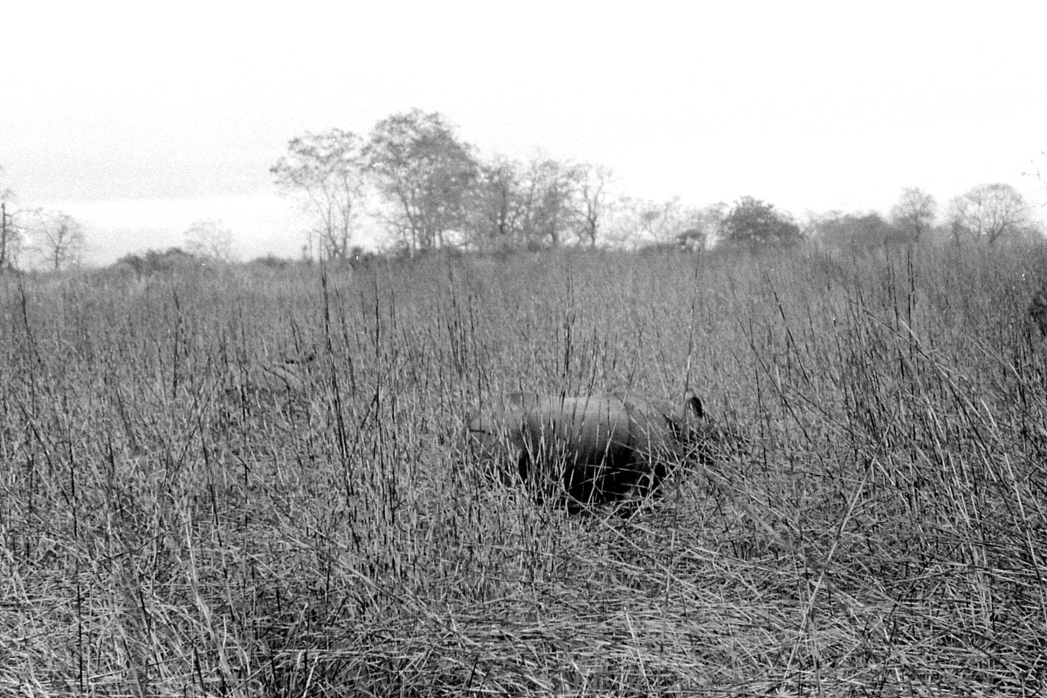 9/4/1990: 27: Kaziranga Indian One Horned Rhino