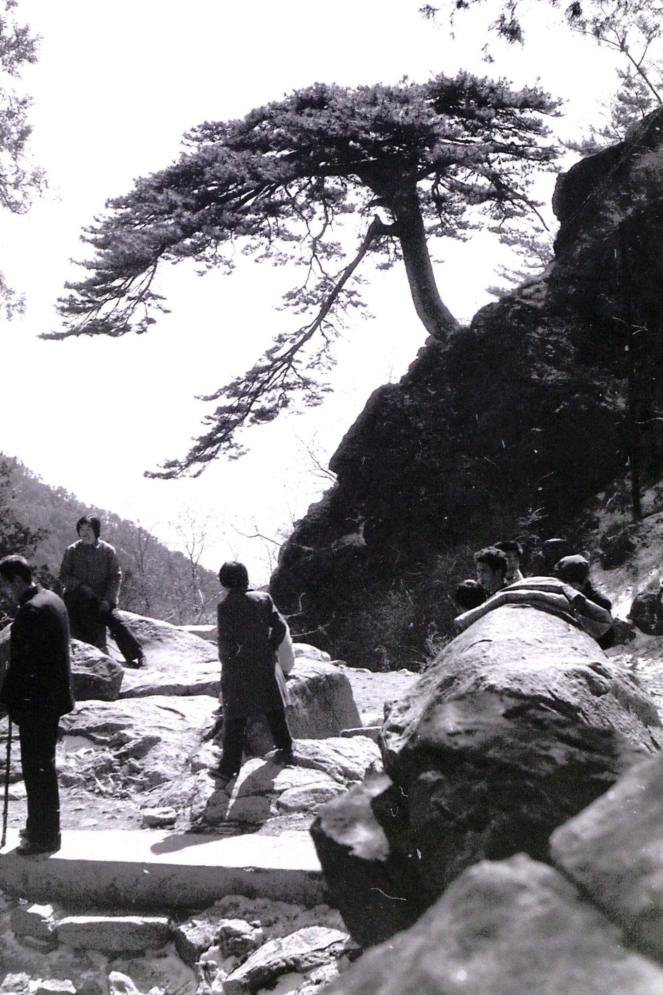 18/2/1989: 14: Taishan: 'Welcome Pine Tree'