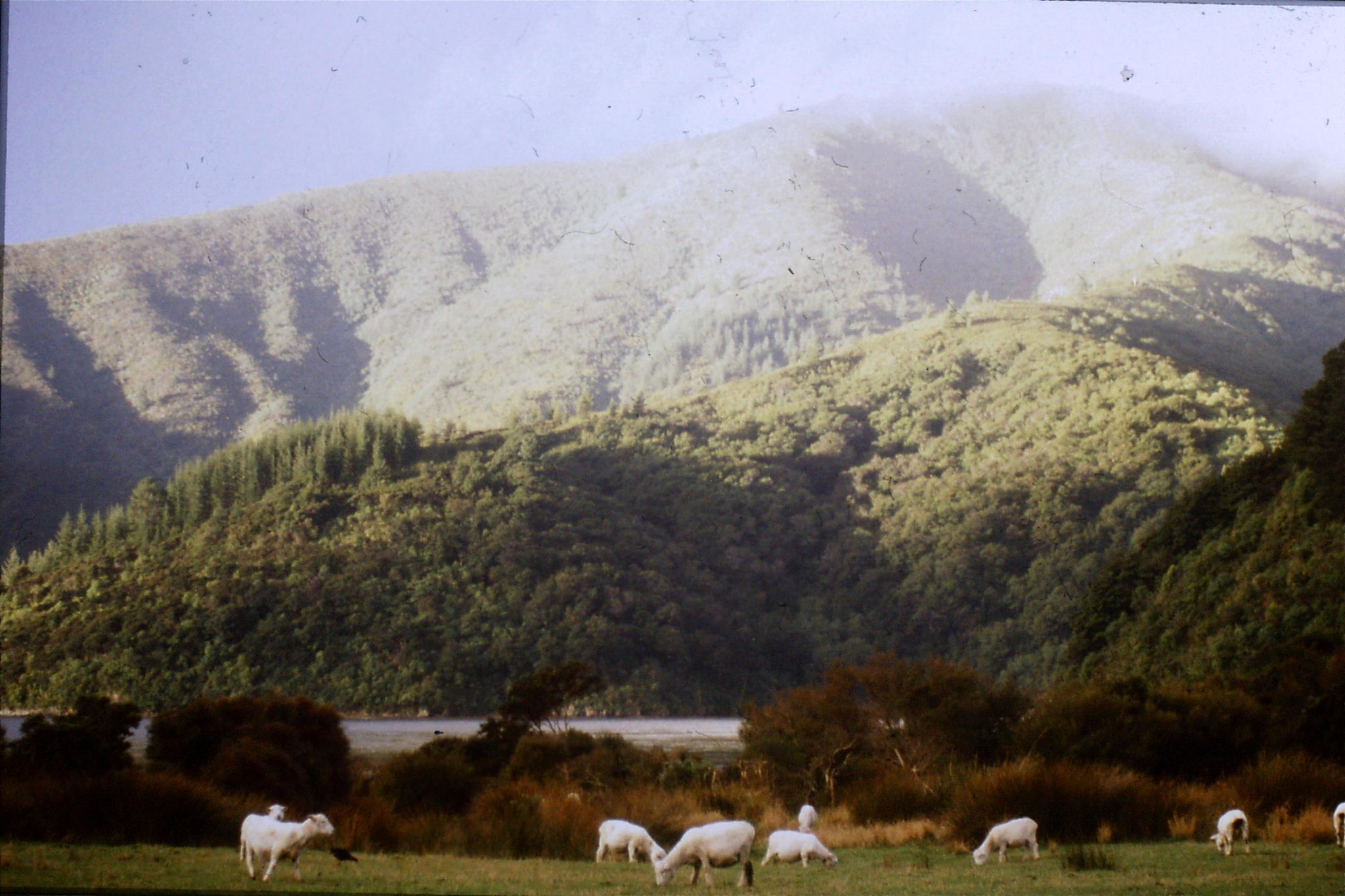 7/8/1990: 1: near Picton, our campsite at Whatamango Bay