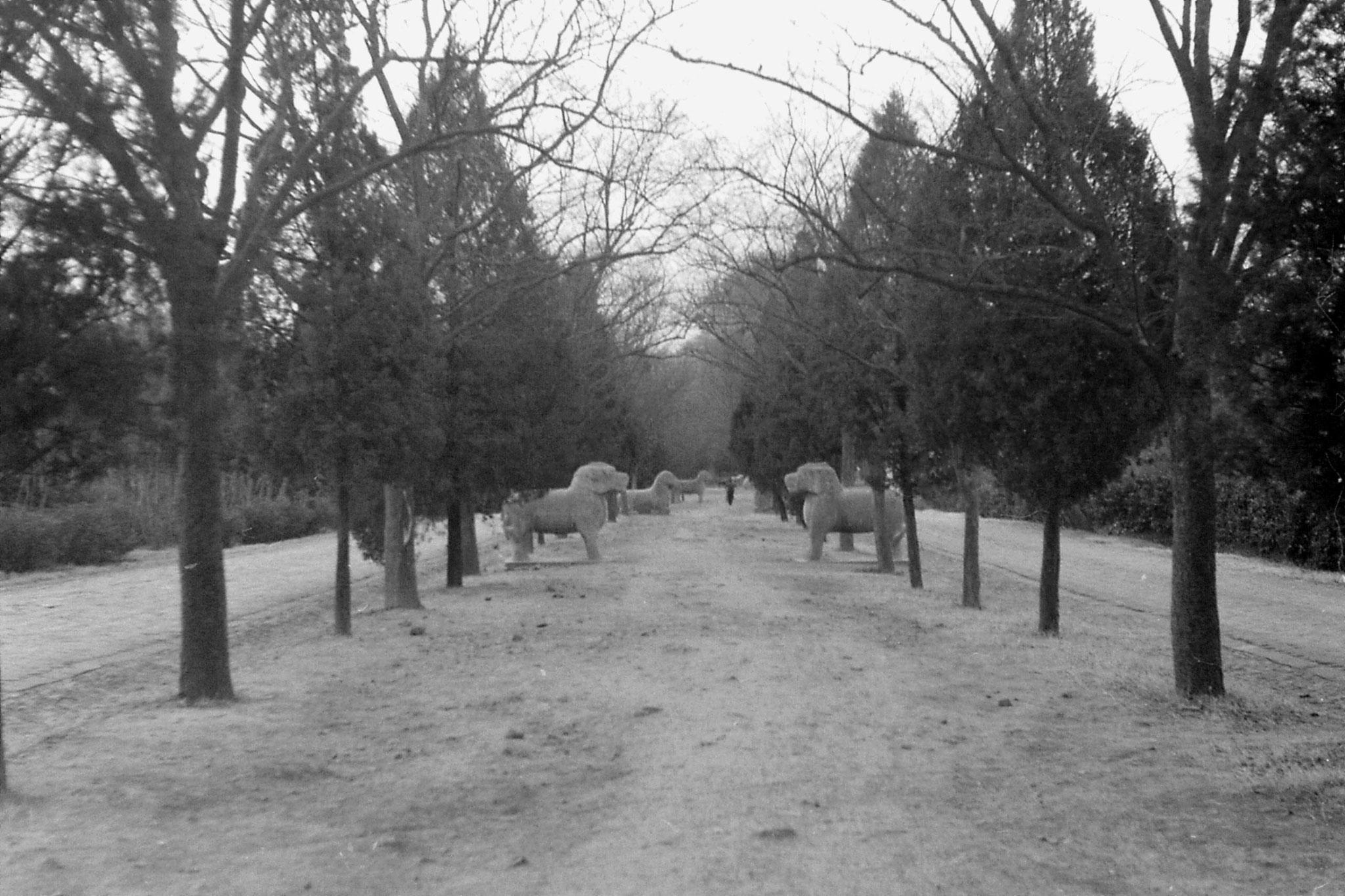 12/12/1988: 27: Nanjing, Linggu Park