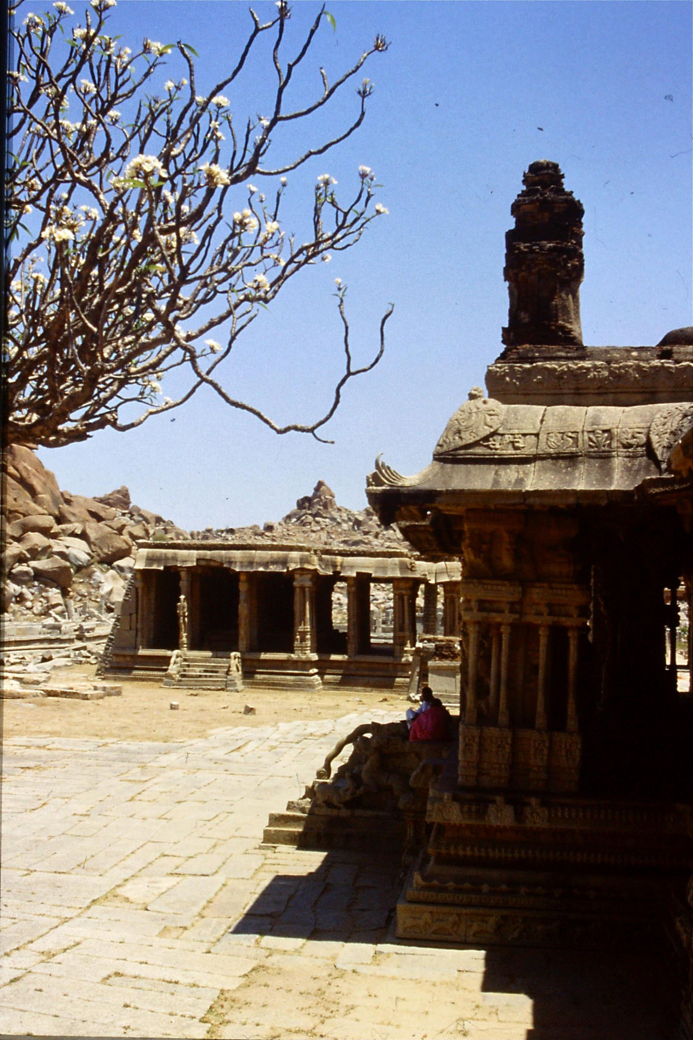 108/25: 20/3/1990 Hampi - first temple carvings and temple tree (Vittala temple)