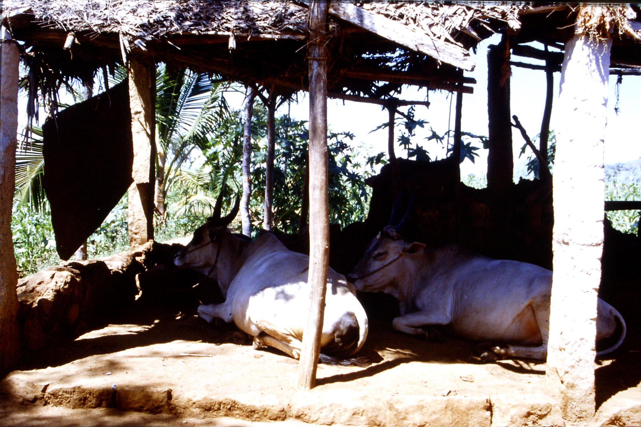 104/30: 21/2/1990 Batlagundi afforestation project