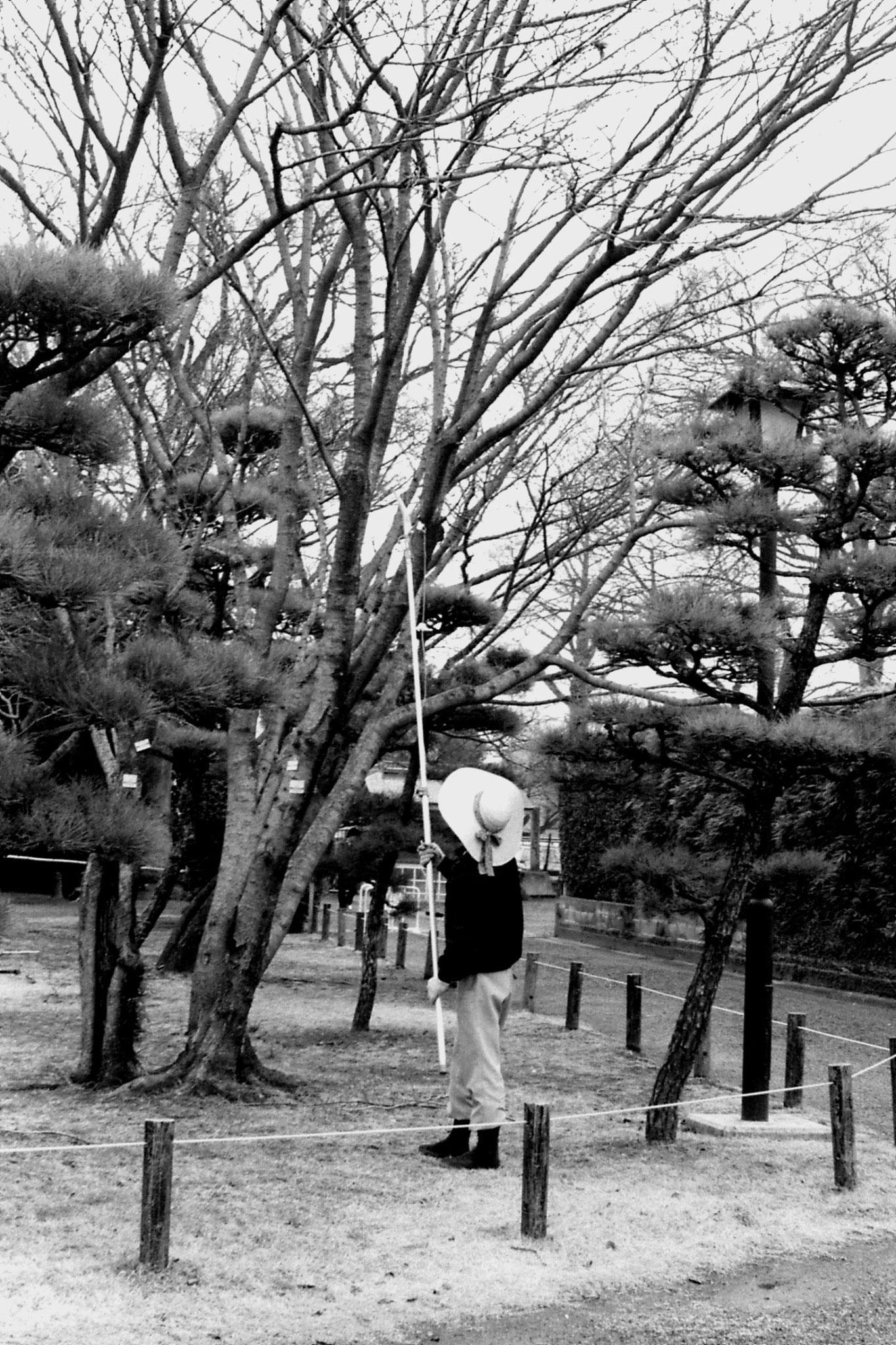 22/1/1989: 20: garden at Kumamoto