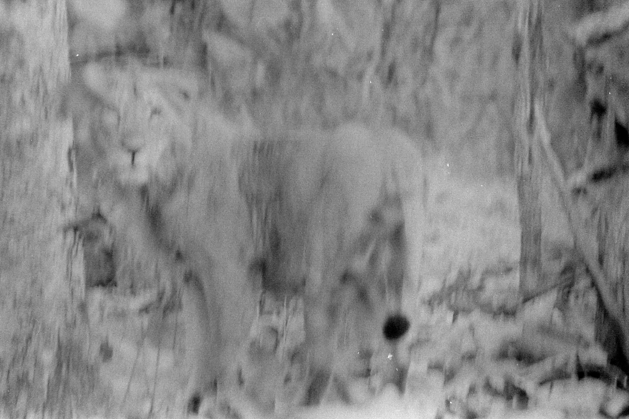 13/12/89: 7: Lions early morning