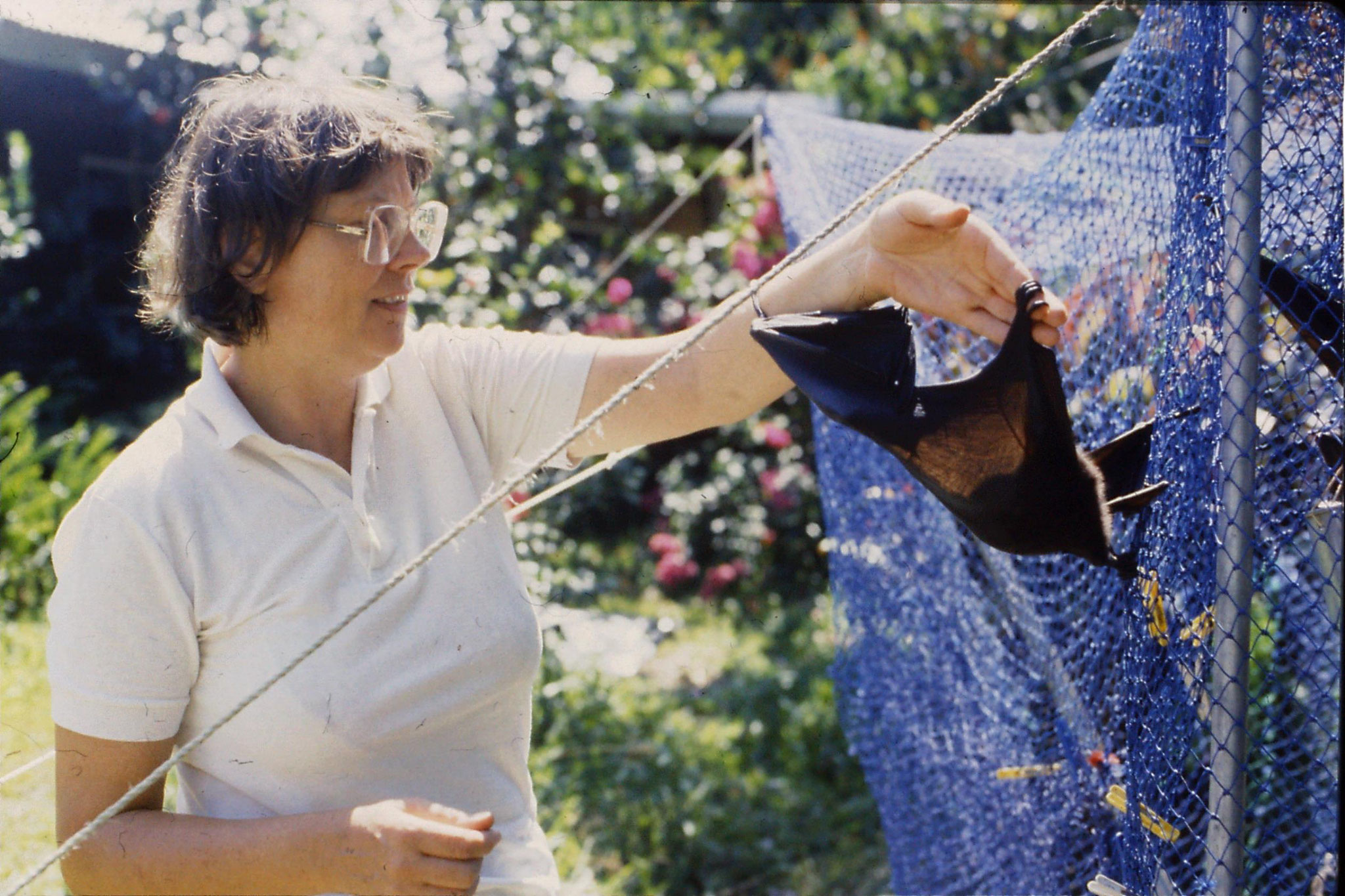 27/10/1990: 21: Cape Tribulation, flying foxes at High and Brigitta's place in Cairns