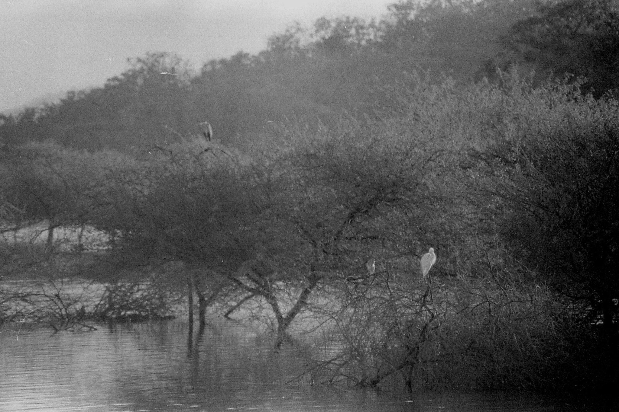 13/12/89: 9: birds on reservoir