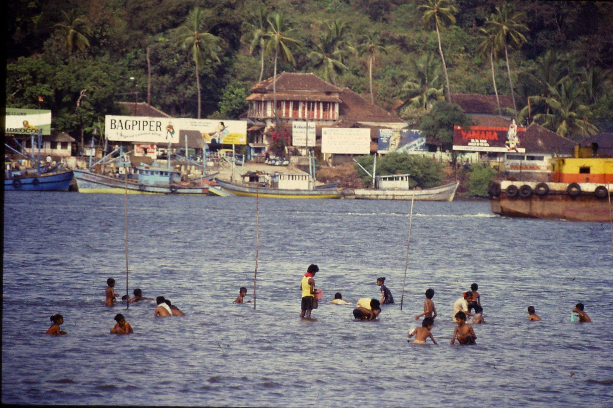 28/12/1989: 24: Goa Panjim collecting shellfish in river
