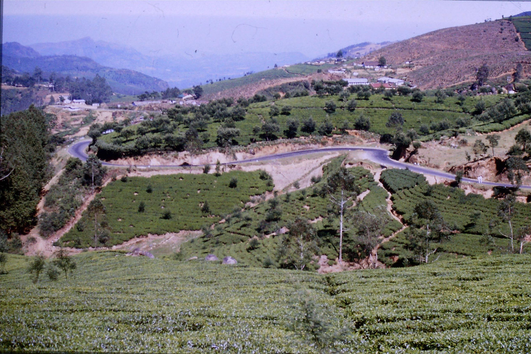 3/2/1990: 1: north of Nuwara Eliya, tea fields