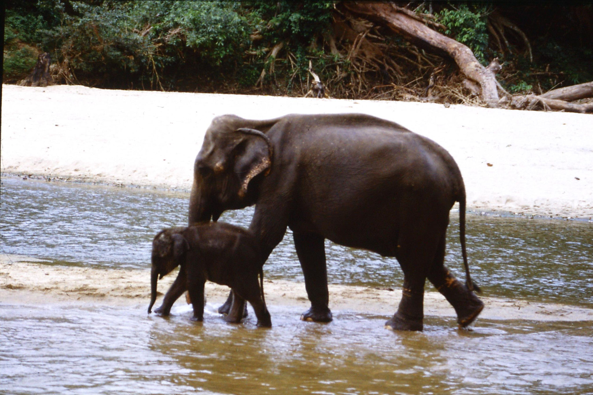 103/16: 10/2/1990 Kegalla elephany orphanage