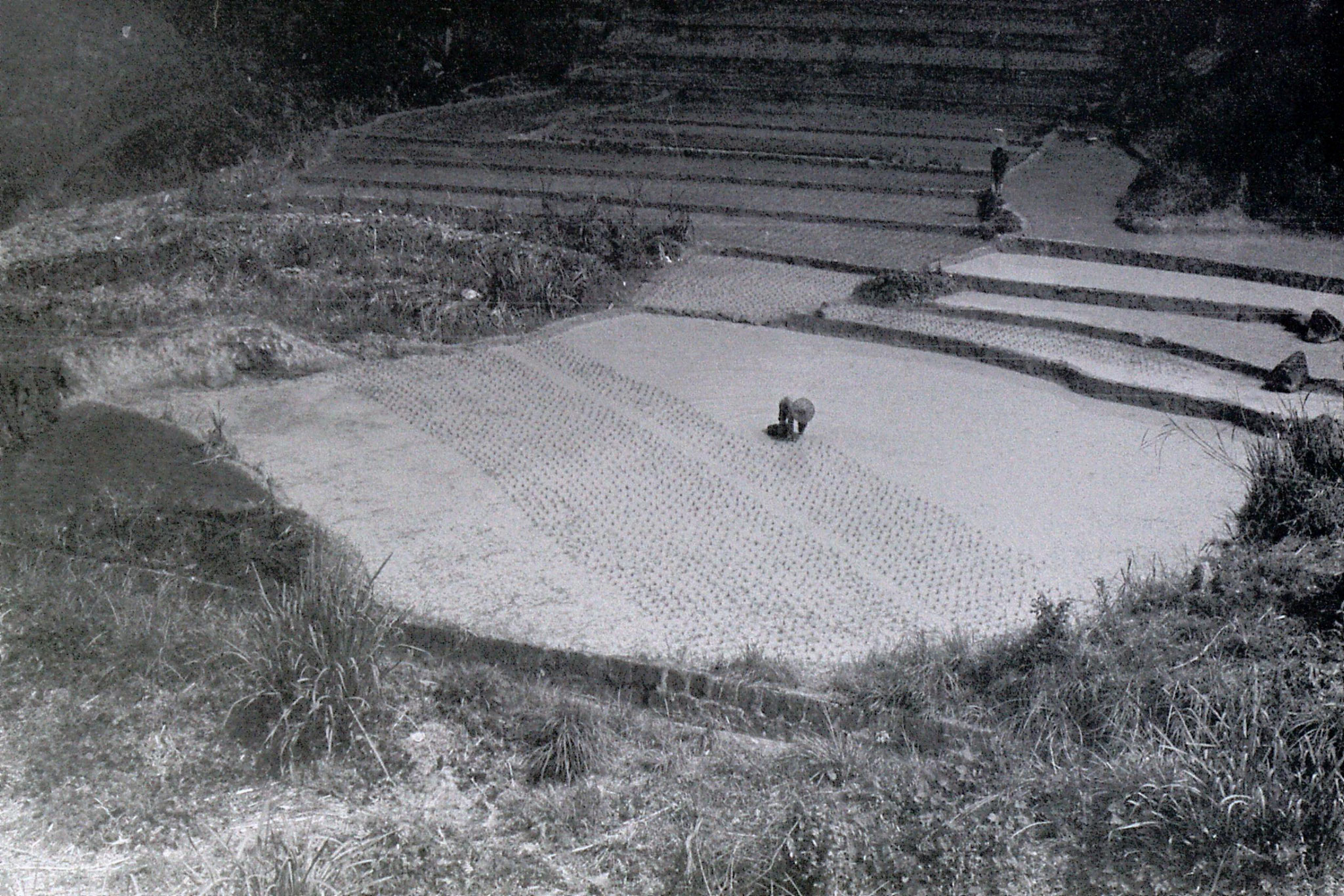 29/3/1989: 31: on train to Xiamen 10.30 planting rice
