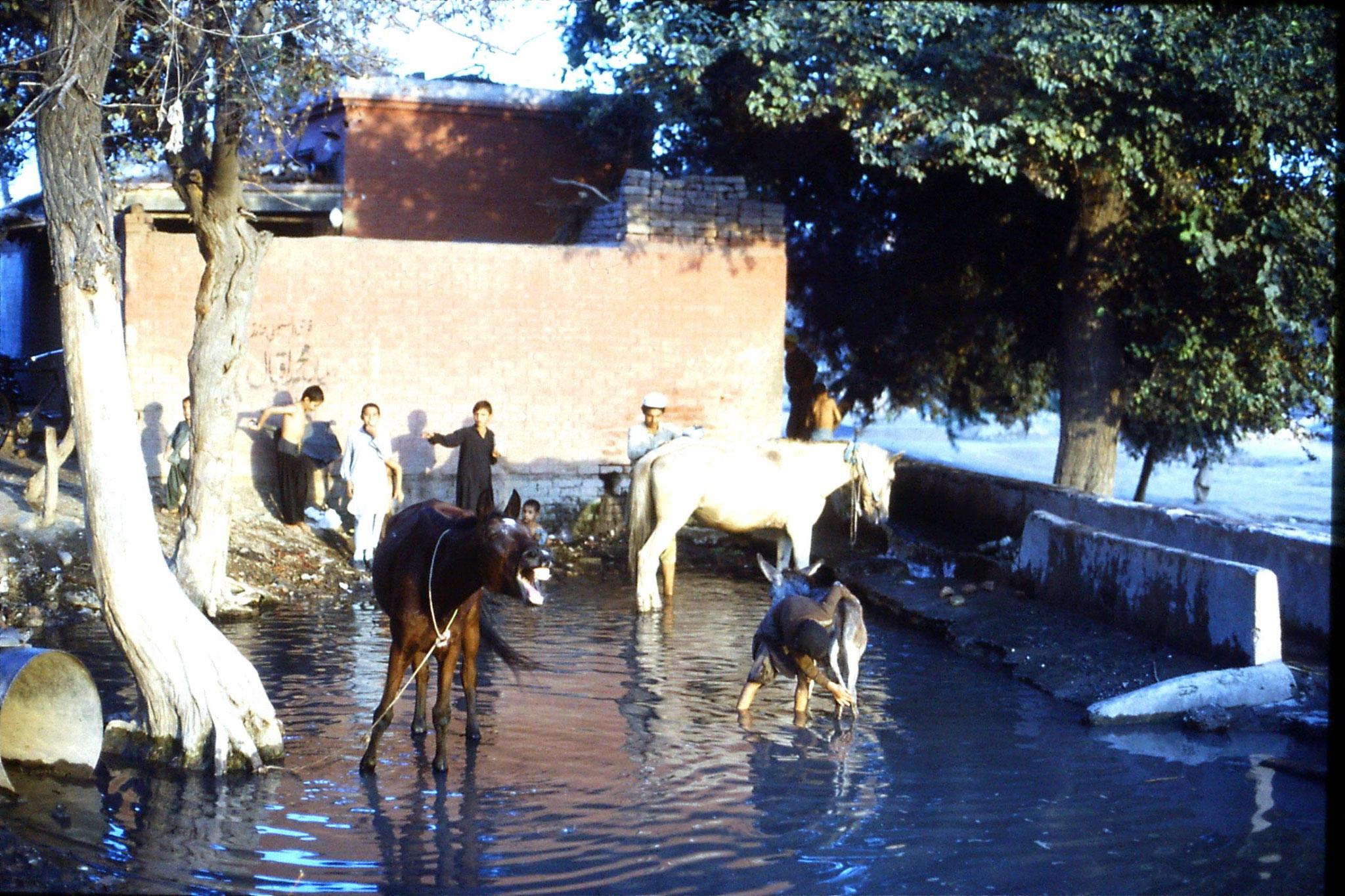 3/11/1989: 8: Peshawar, Wazir Barg horse bath
