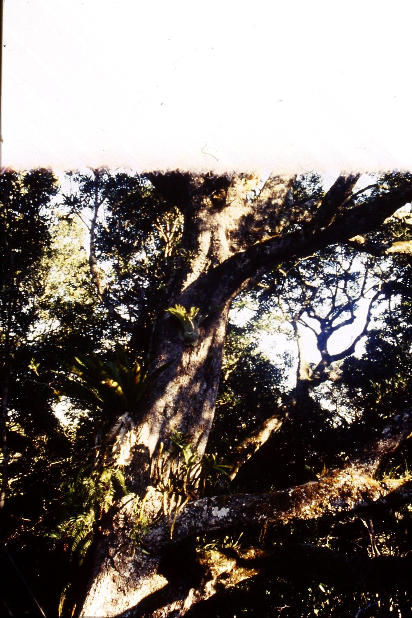 12/10/1990: -2: Mt Lamington, rainforest