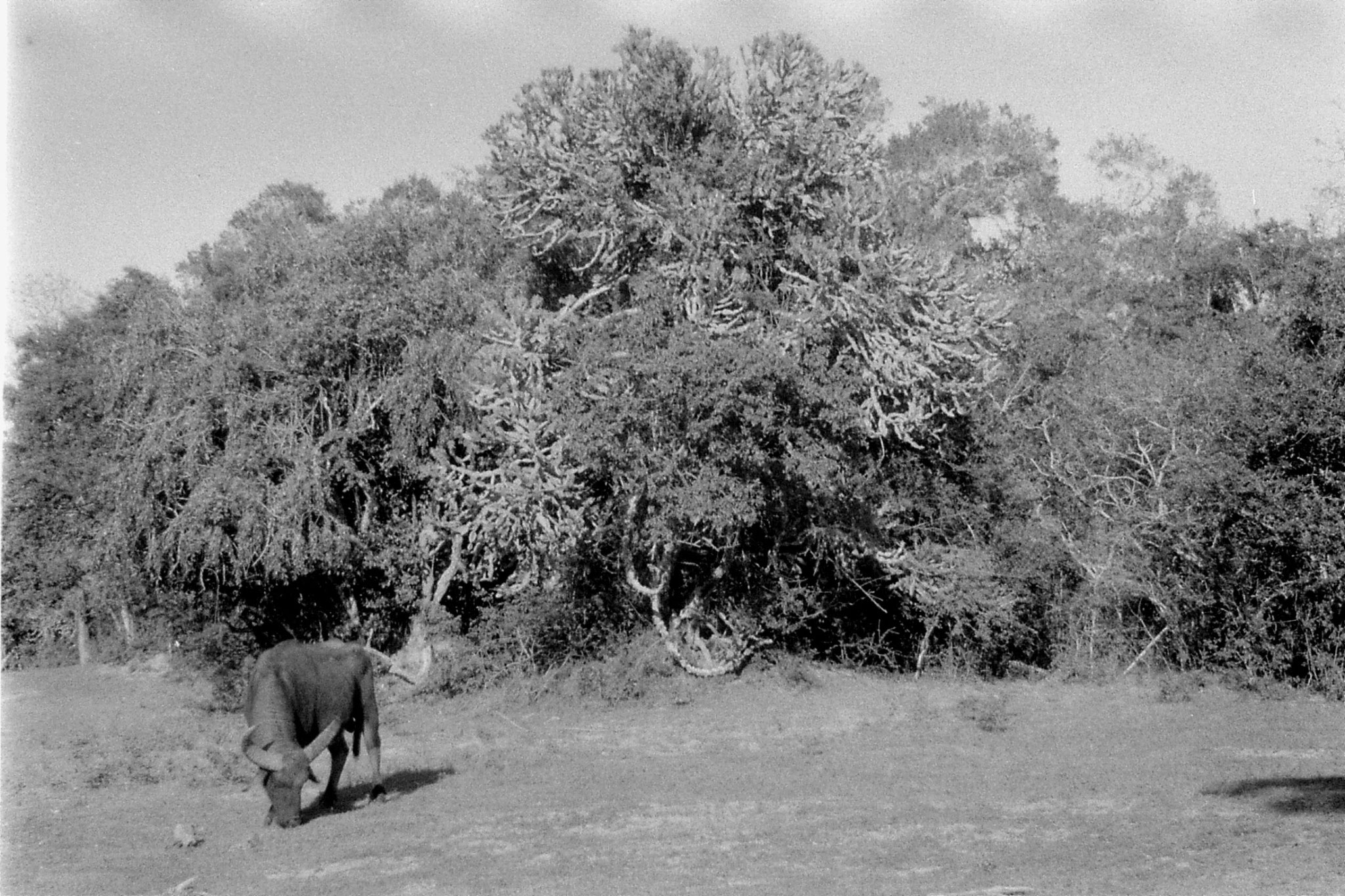 21/1/90: 31: Yala National Park
