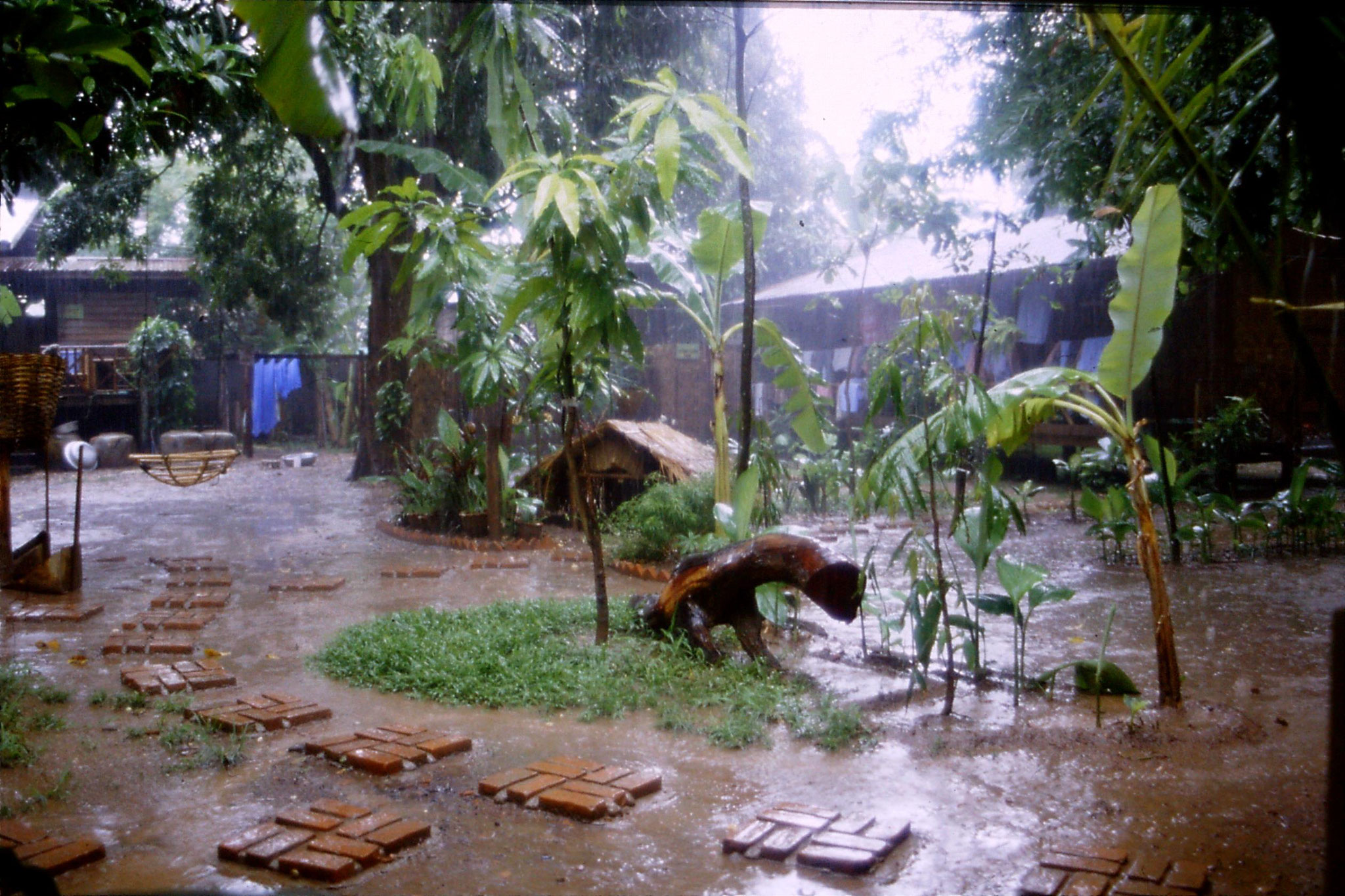 29/5/1990: 14: rain at Mut Mee guesthouse