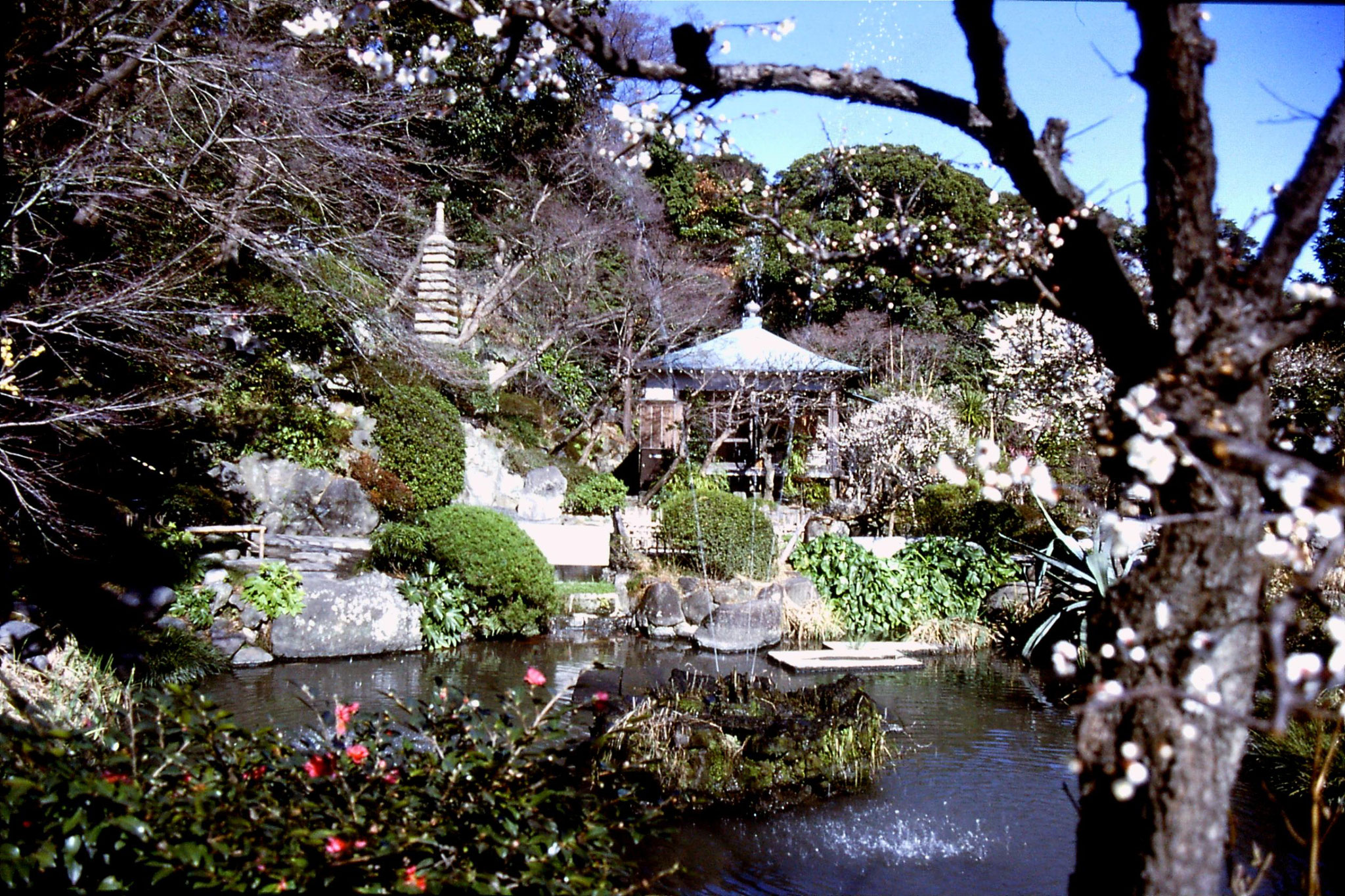 29/1/1989: 0: garden at Hase Canon Temple