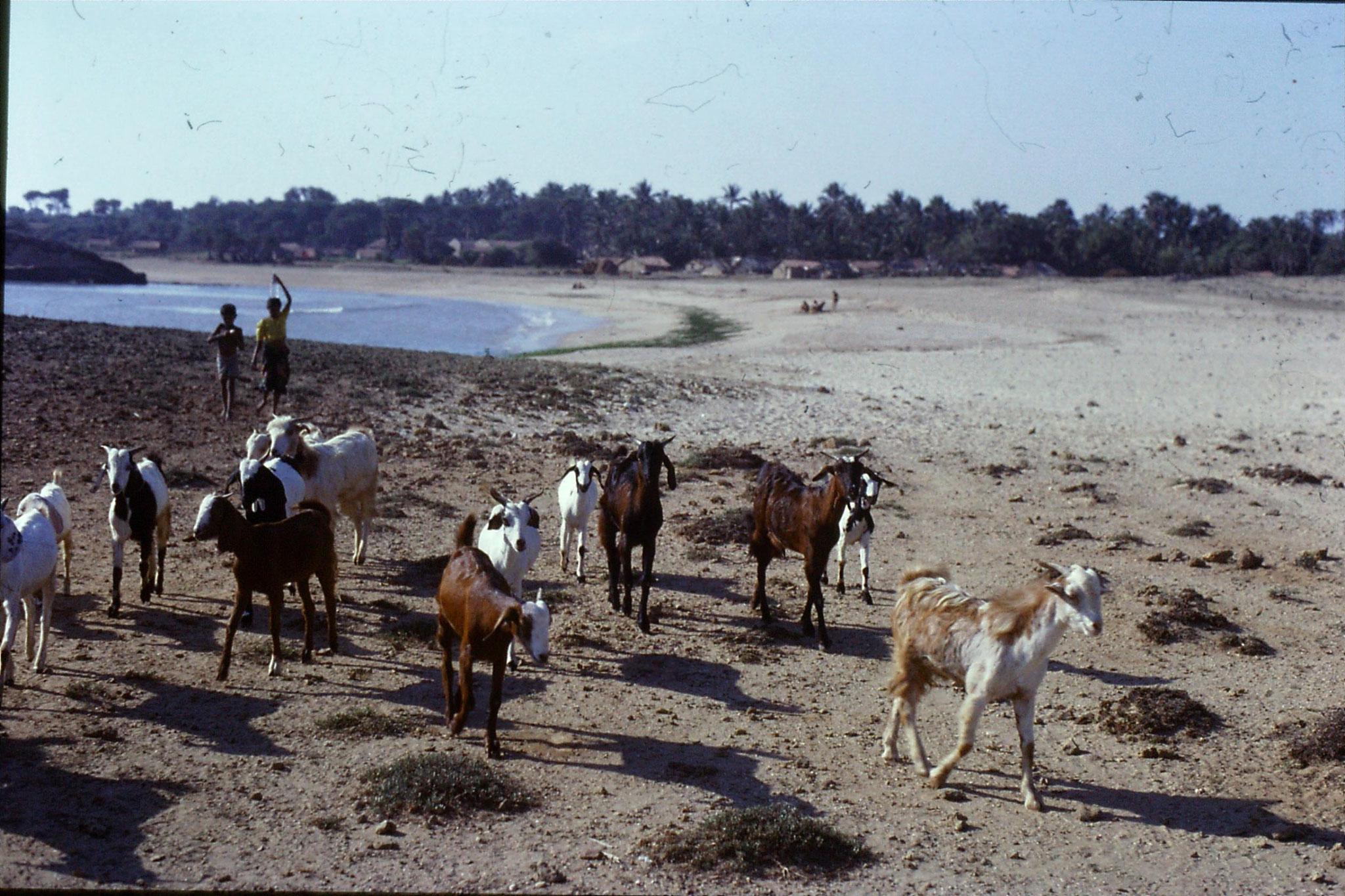 15/12/1989: 5: Diu, Nagoa Beach