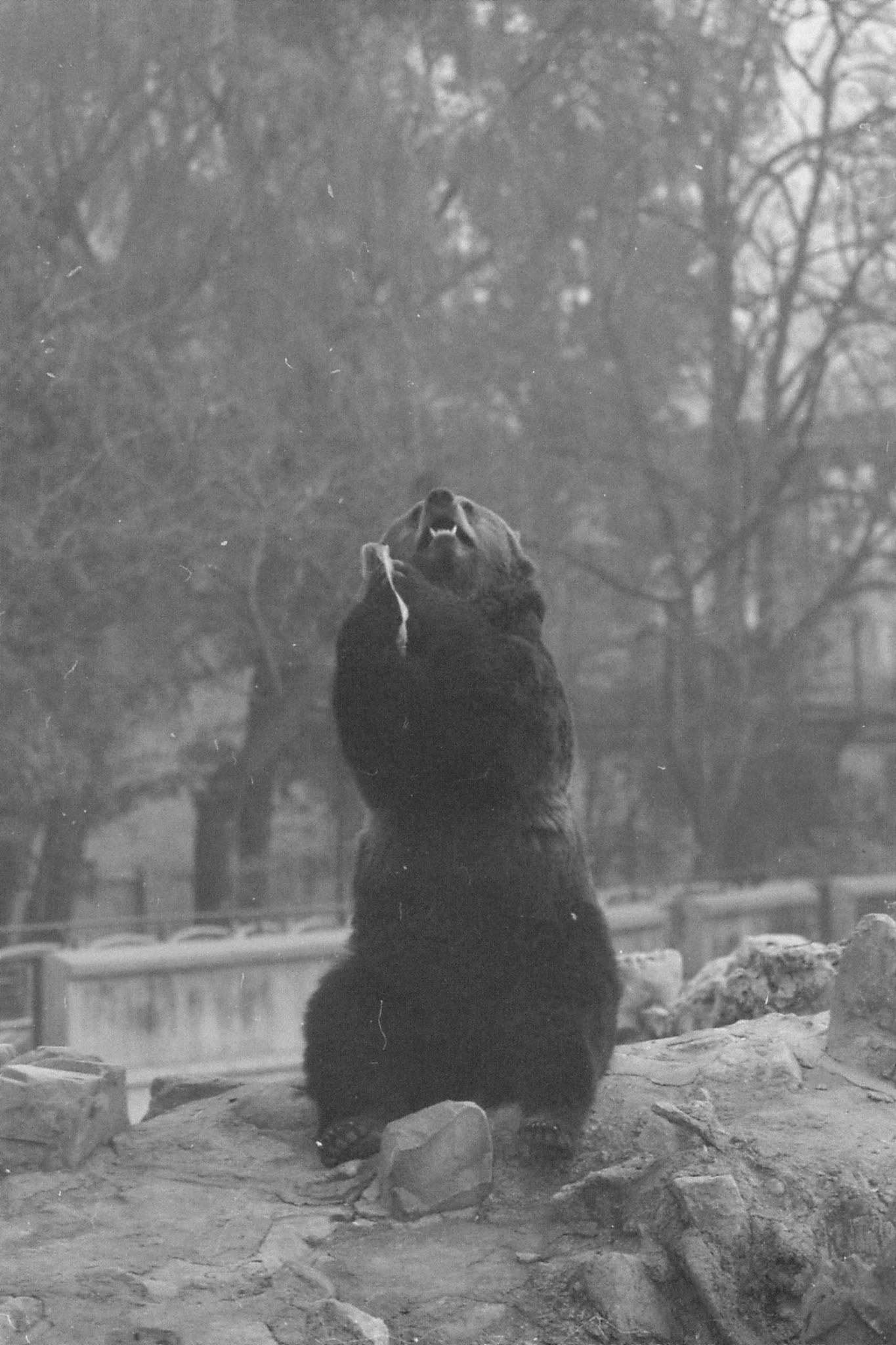 19/11/1988: 10: Beijing Zoo