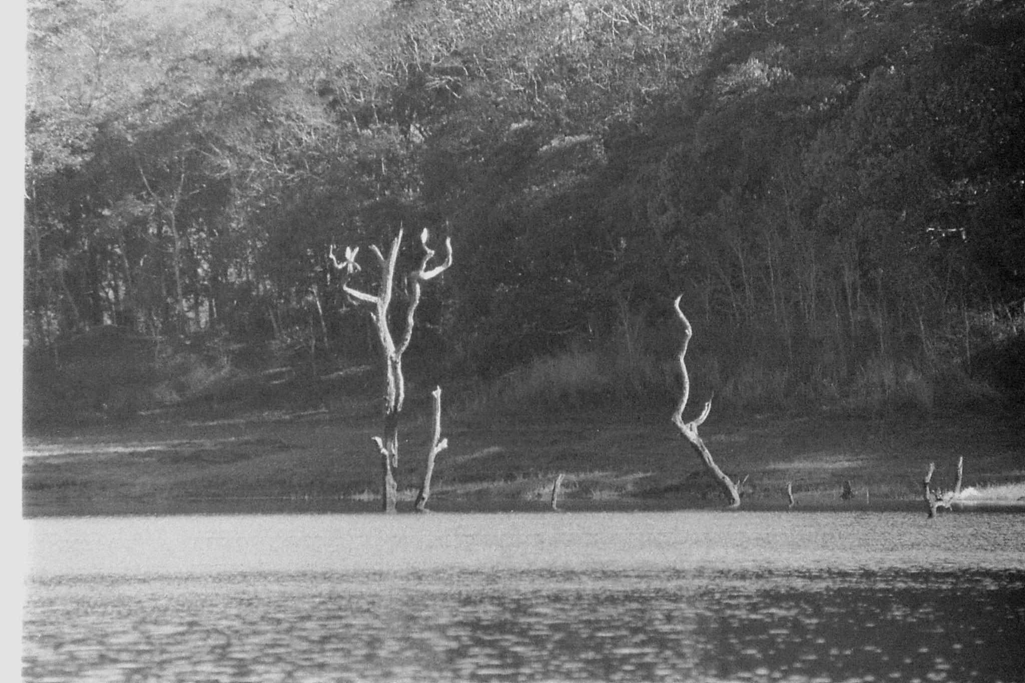 097/28: 23/2/1990 Periyar egrets