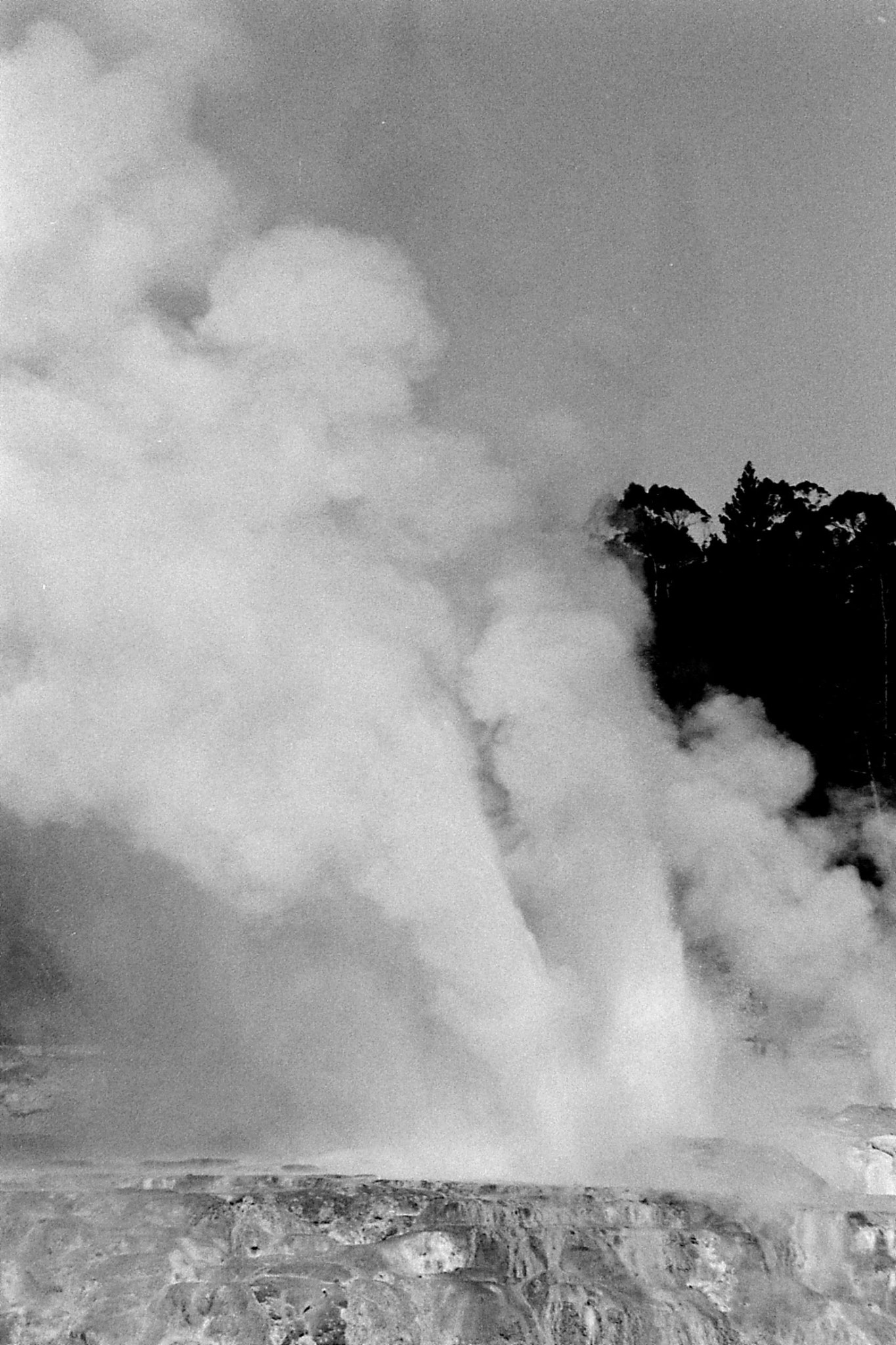 31/8/1990: 13: Rotorua geyser Waikorohihi