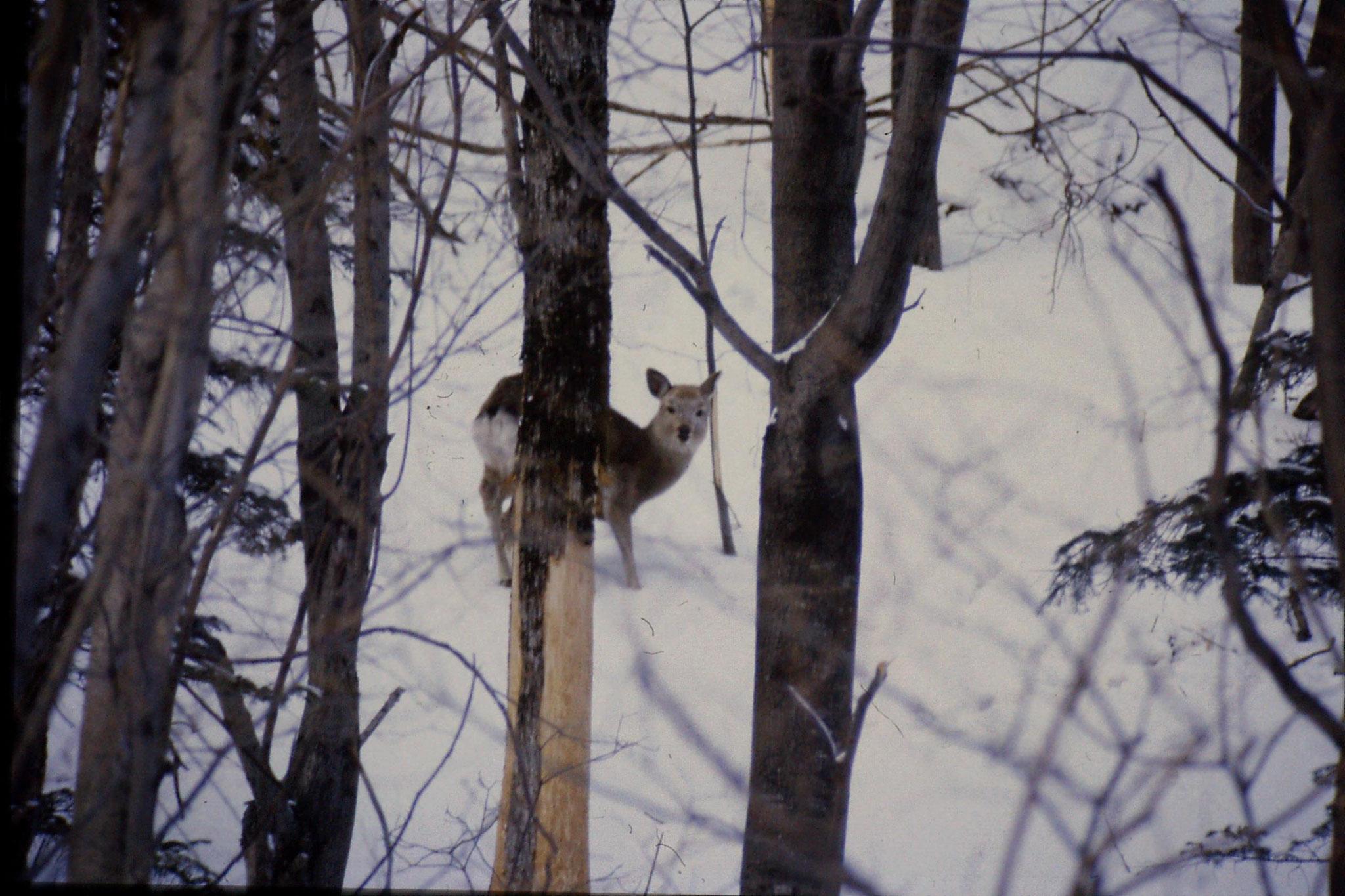 12/1/1989: 22: Sounkyo Onsen Gorge