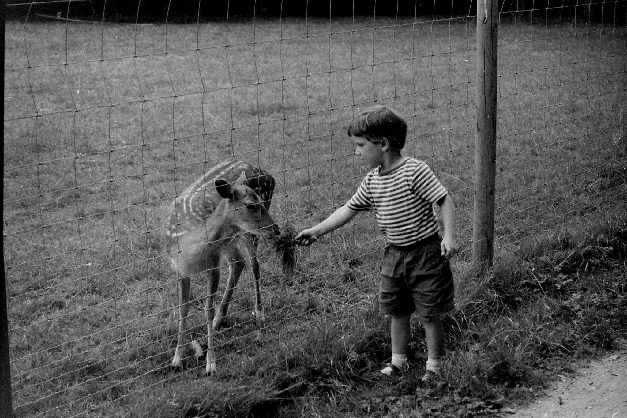 16/8/88: 28: Bonn Forest Deer Park