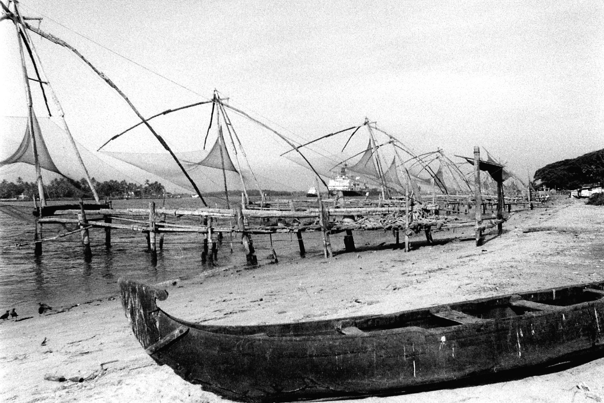 25/2/90: 7: Cochin dolphins and views of Fort Cochin