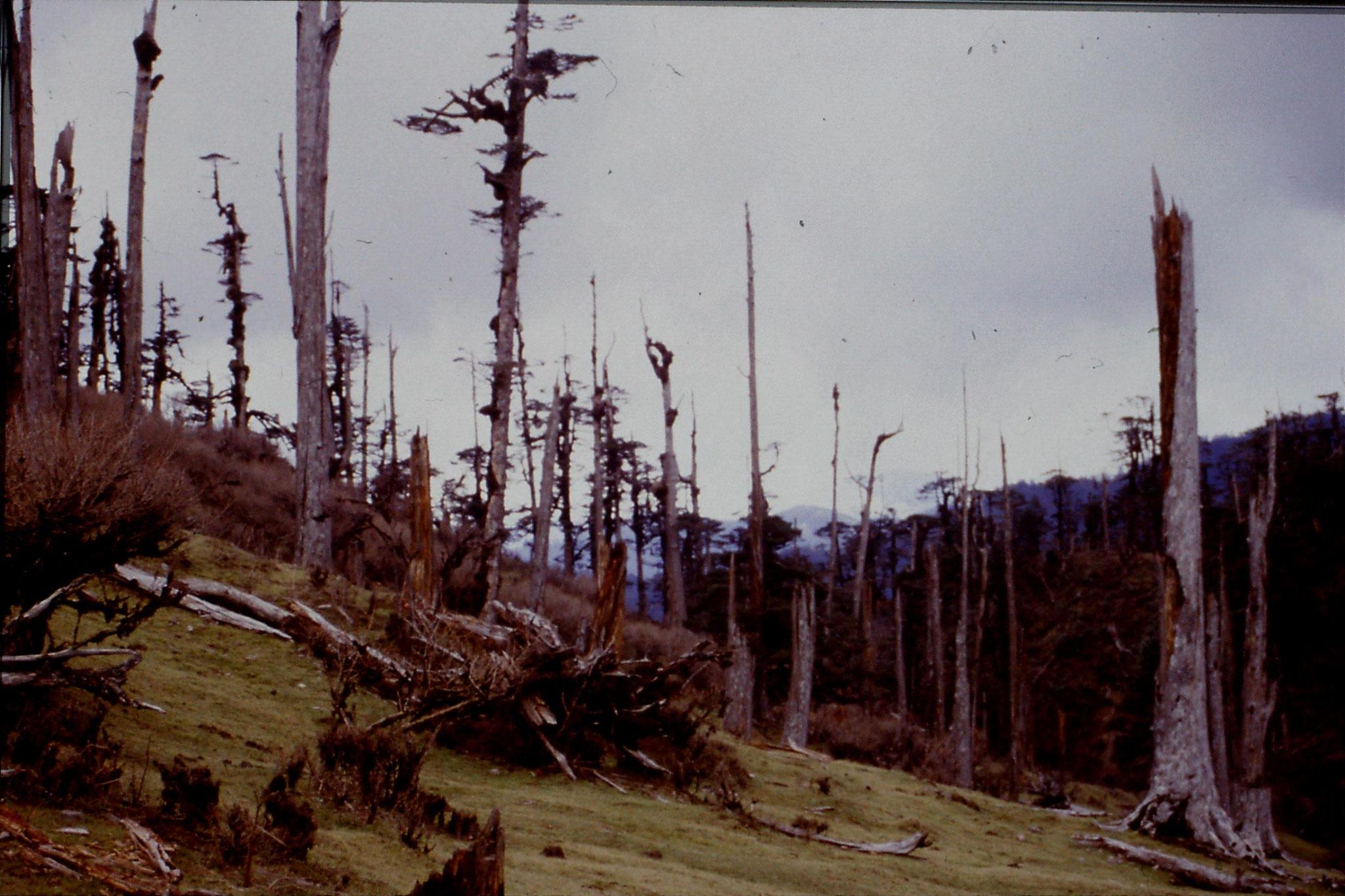 7/5/1990: 18: dead trees