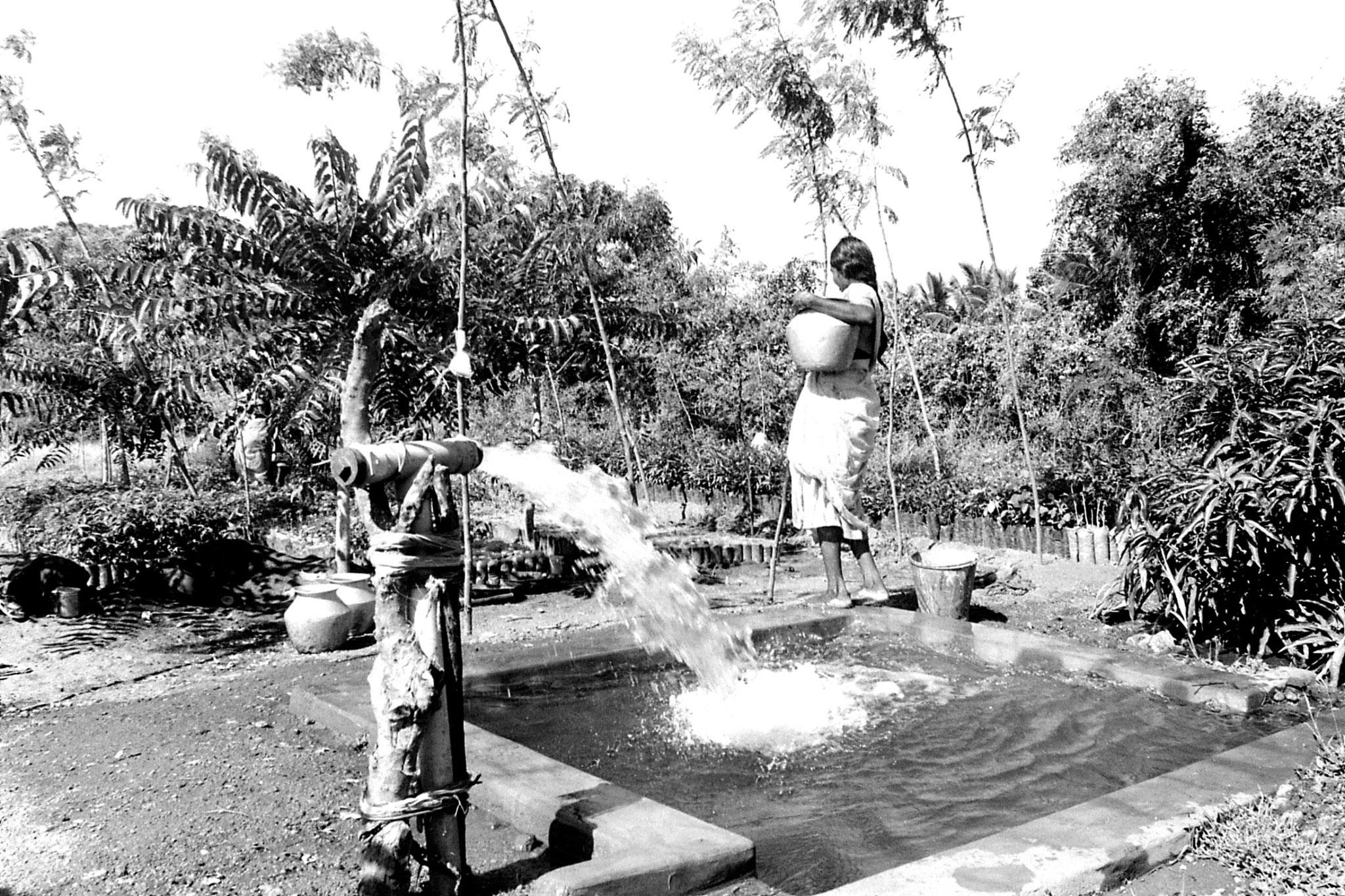 21/2/1990: 19: Batlagundi afforestation project