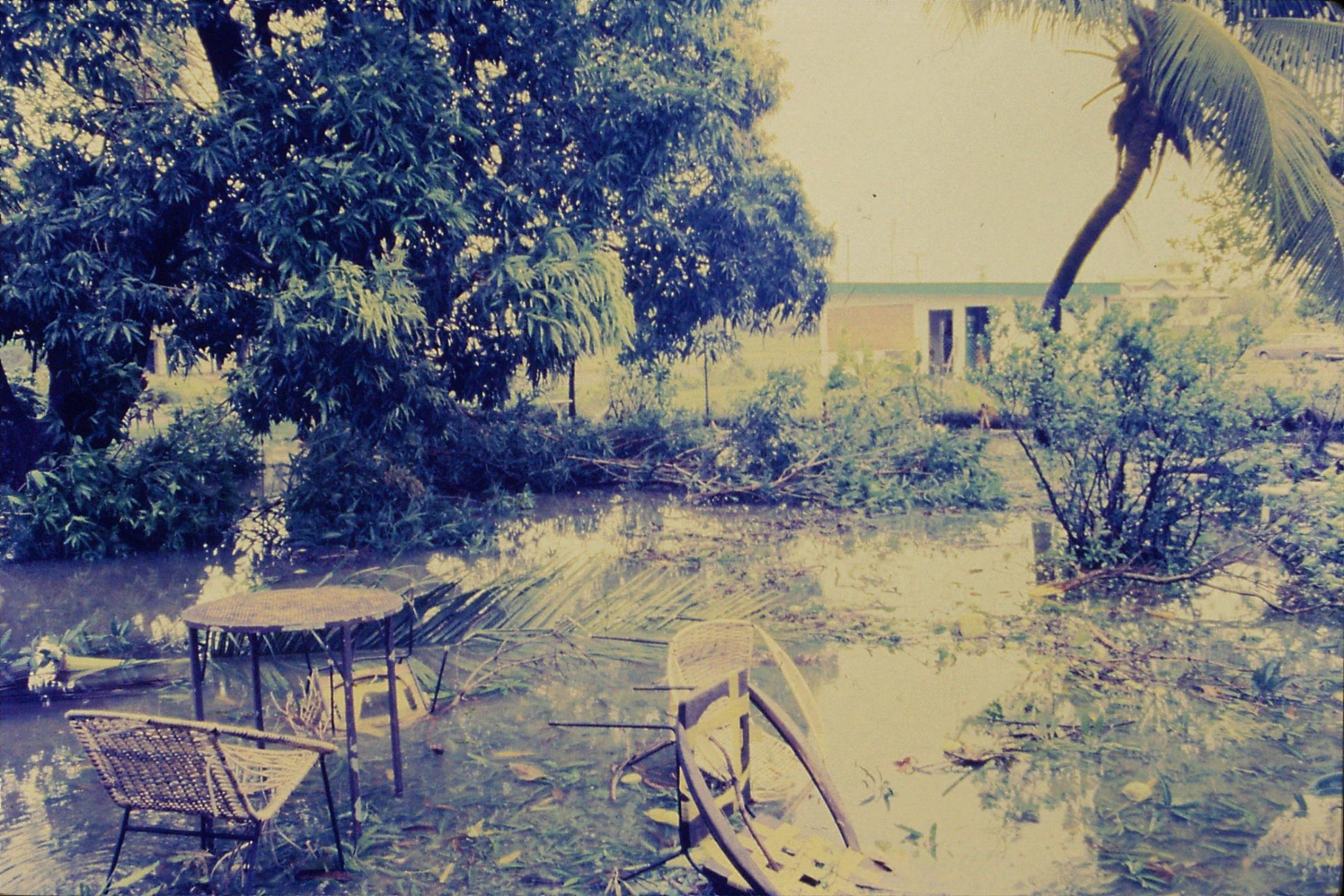 28/11/1990: 26: Fiji, hotel garden after Hurricane Sina